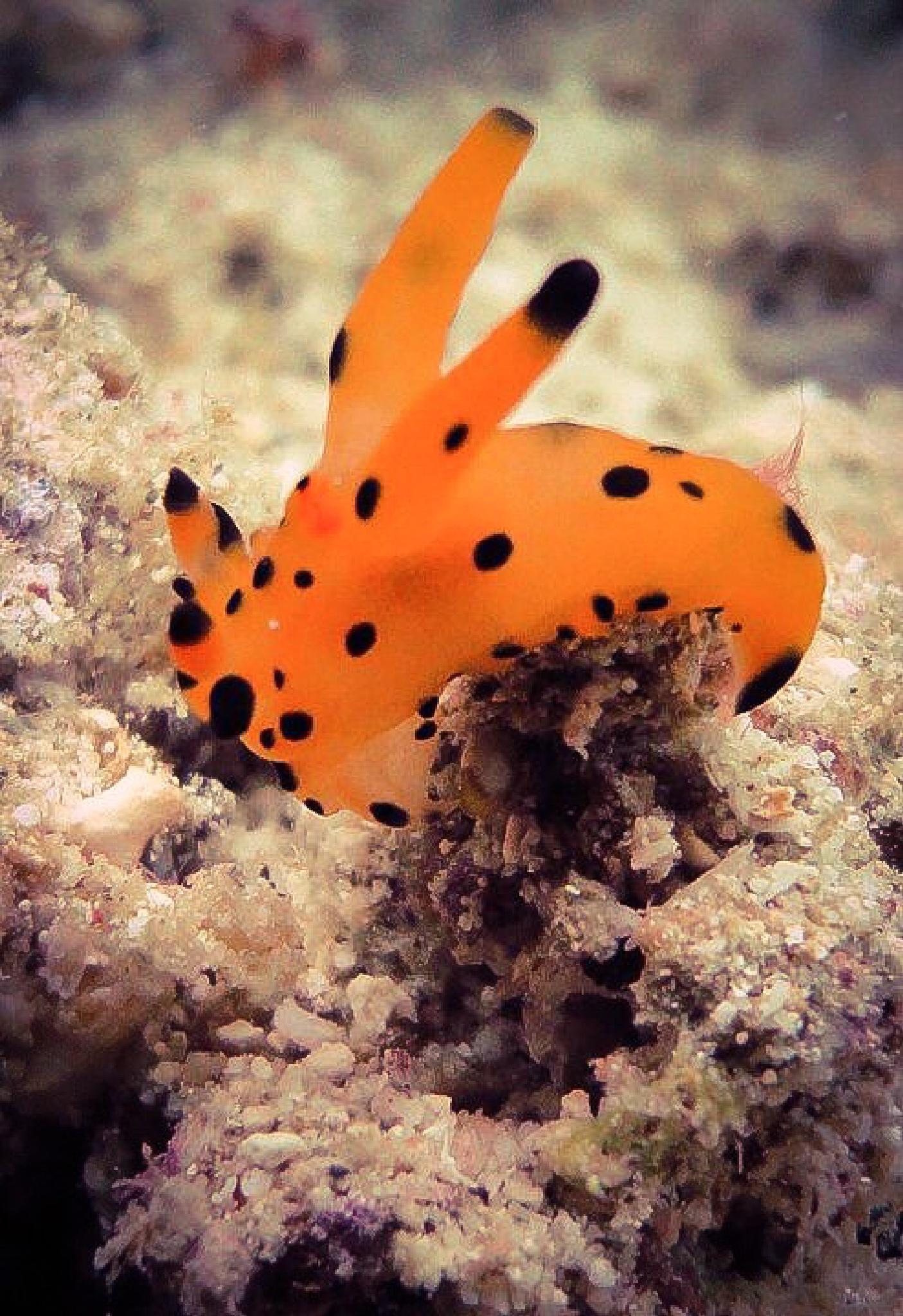 Nudibranch by RoarPhoto
