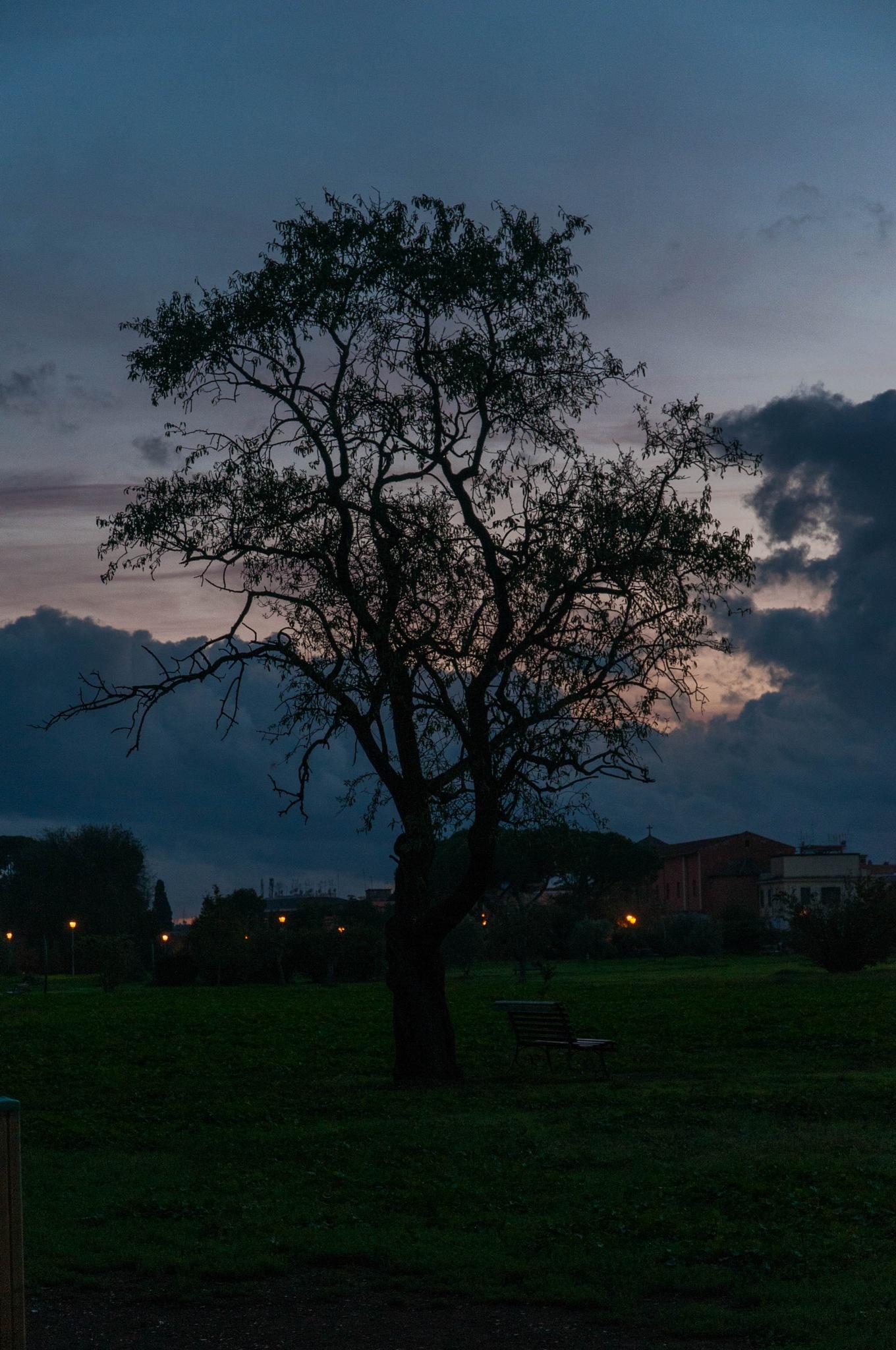Untitled by Livio Seri