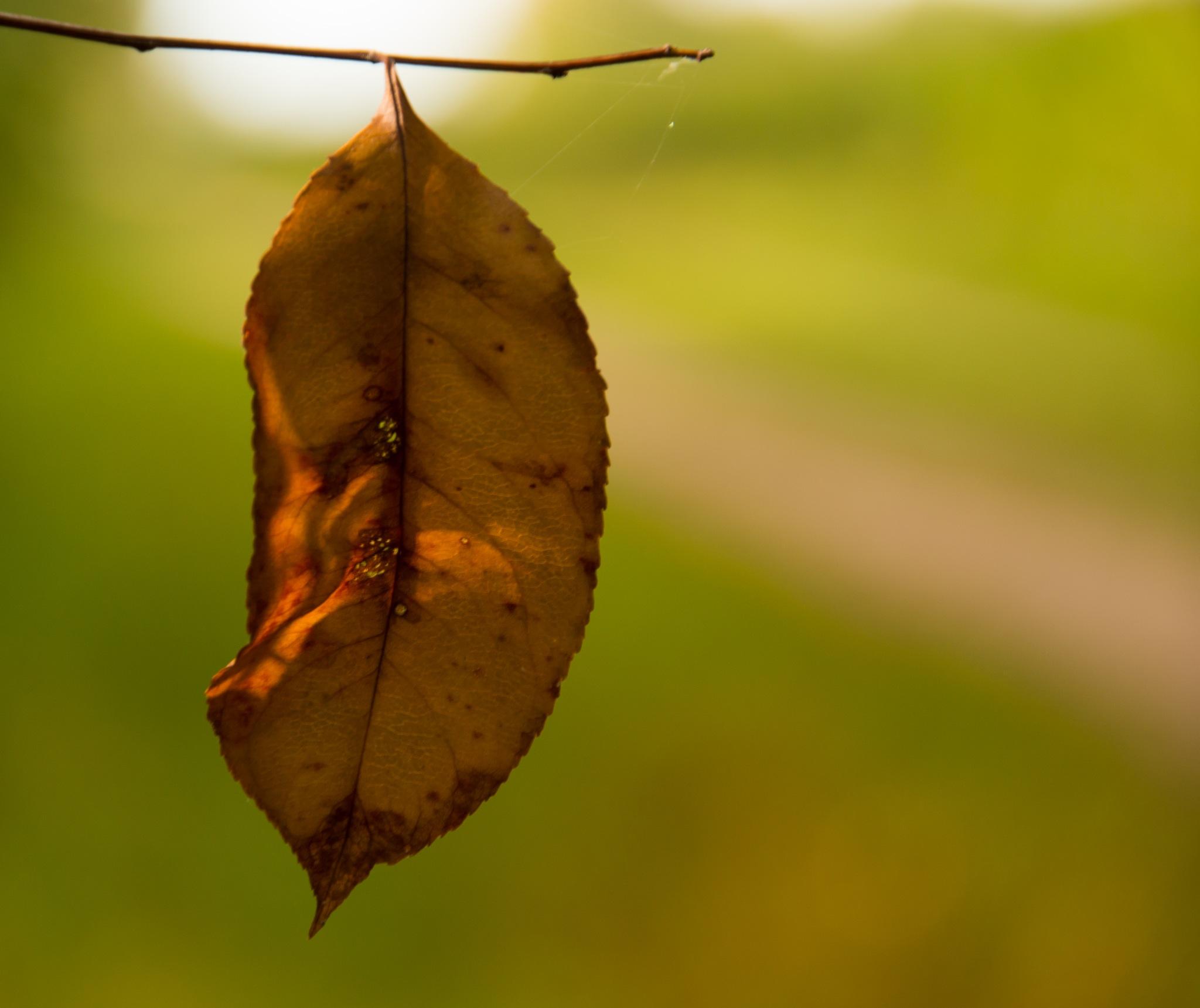 Leaf by Hans Lunenborg