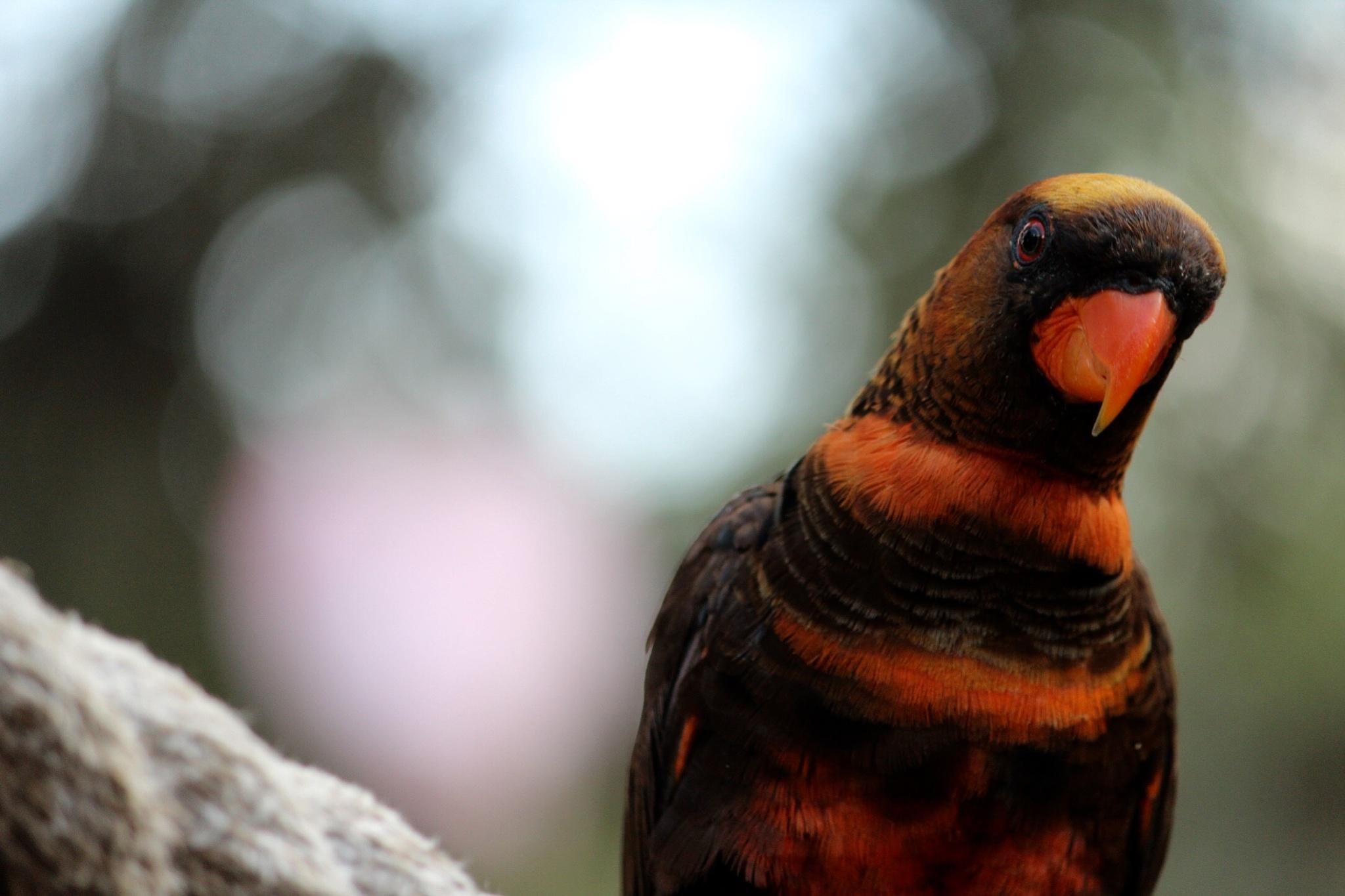 Bird by villy123