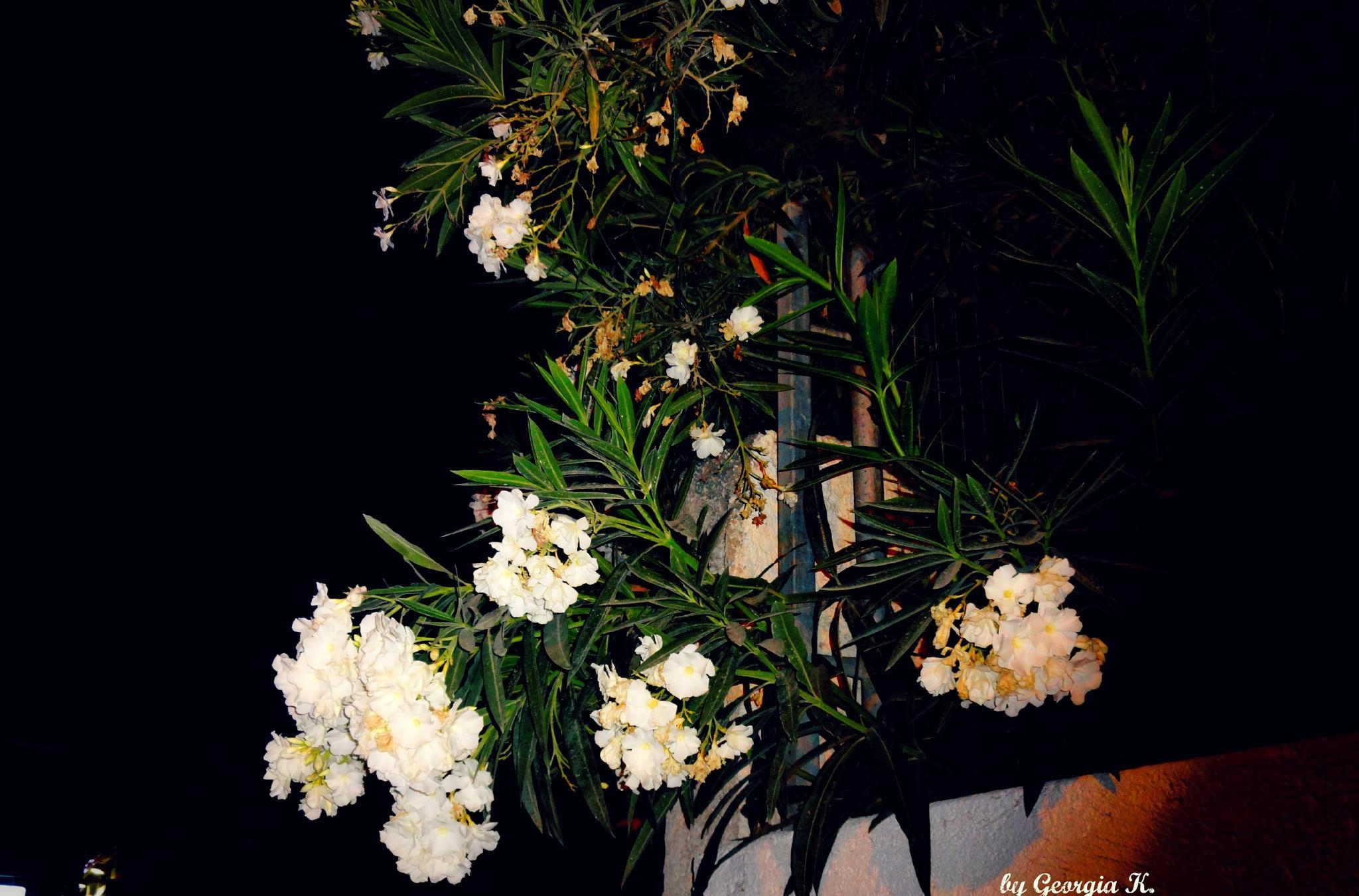 flowers... by GeorgiaKom