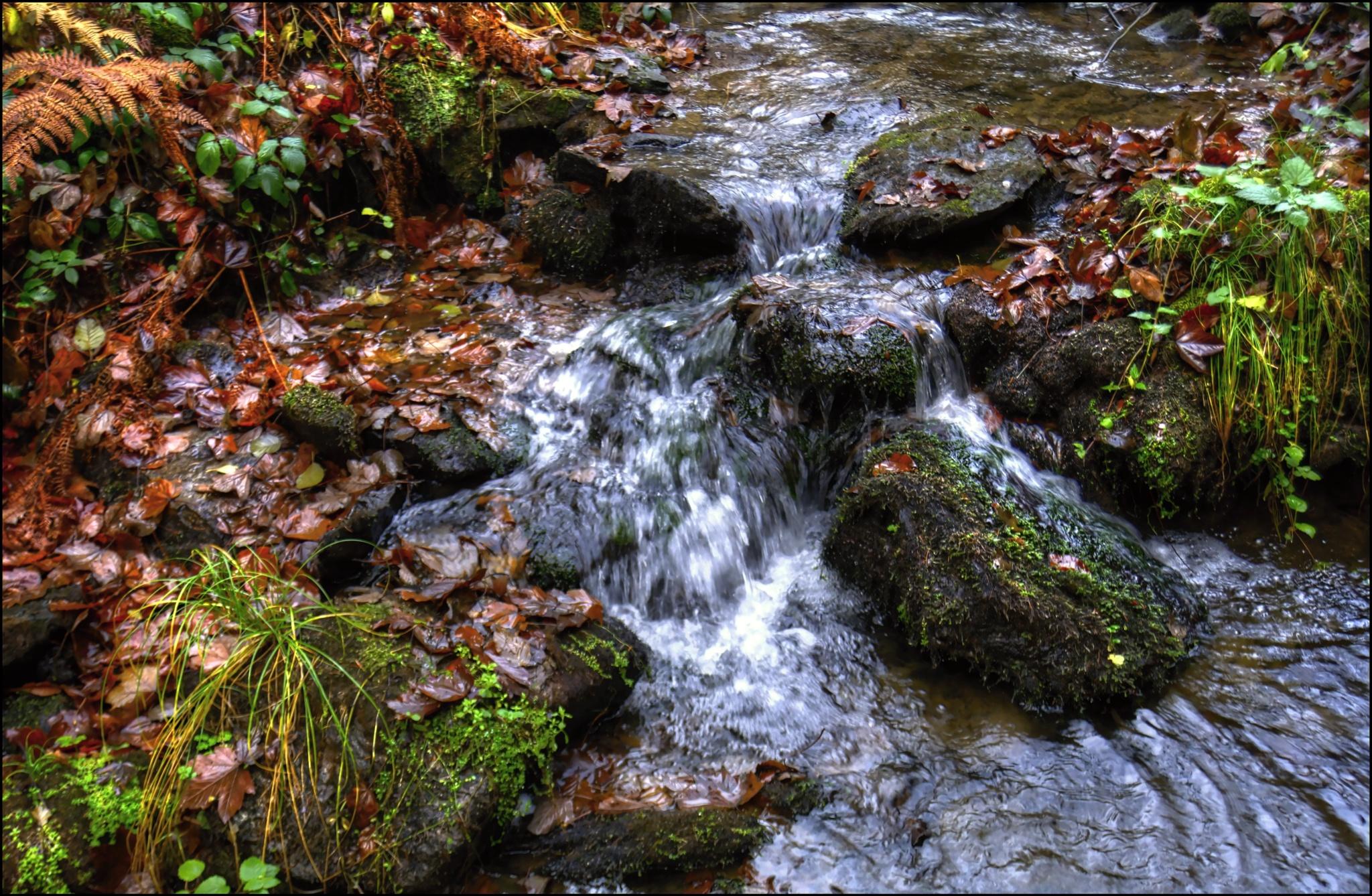 Podzim v řece by Hana