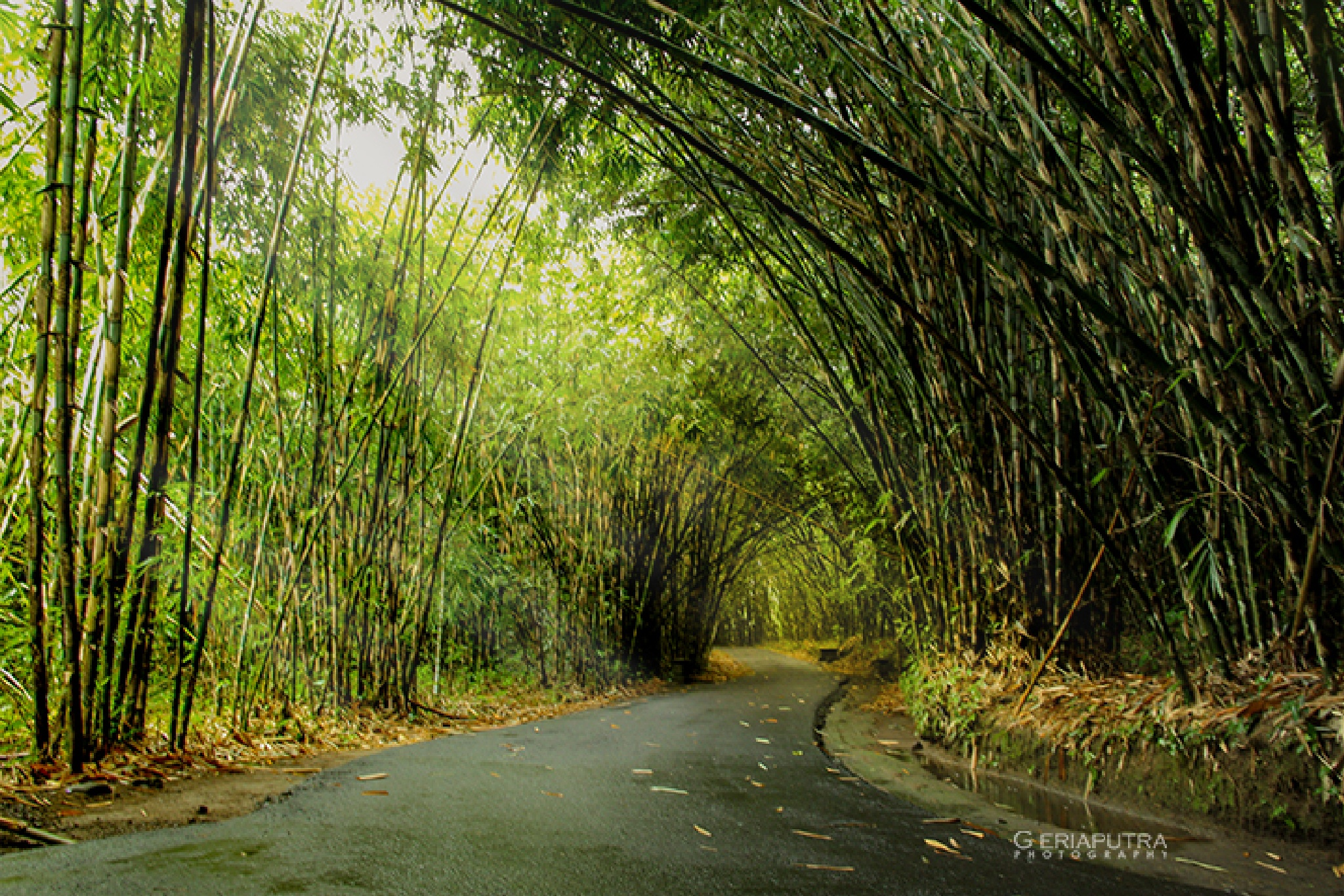 BAMBOO FOREST by Made Harsa Geriaputra
