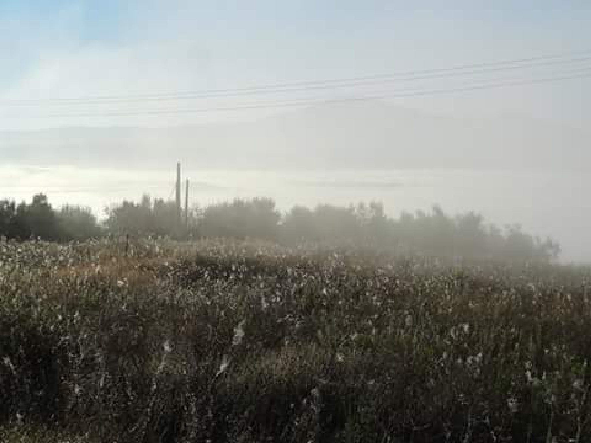 Olives in autumn fog  by Matteo Venturini