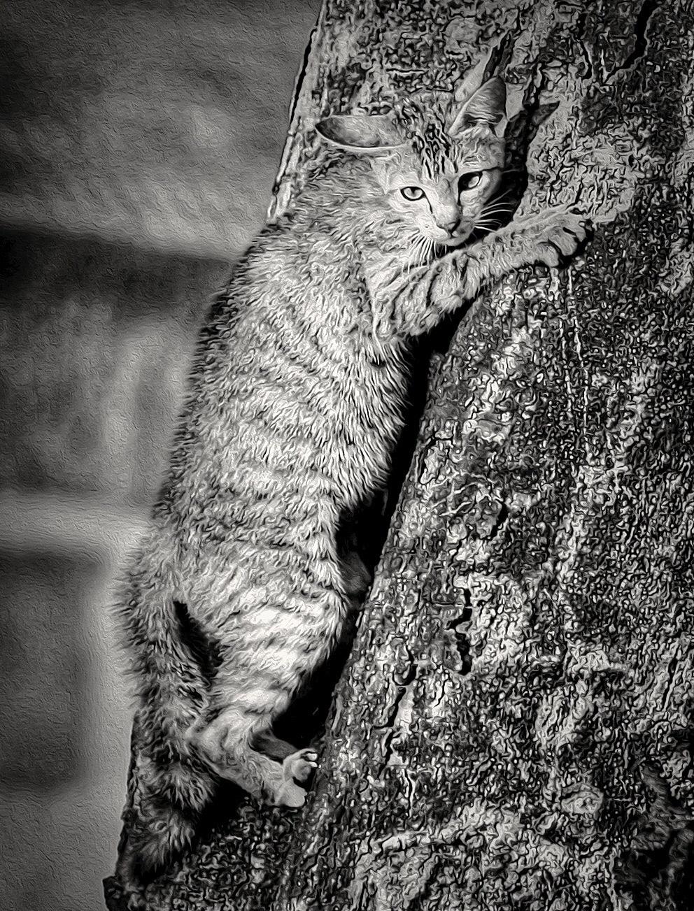 Stressed Cat  by EduardBetz LRPS