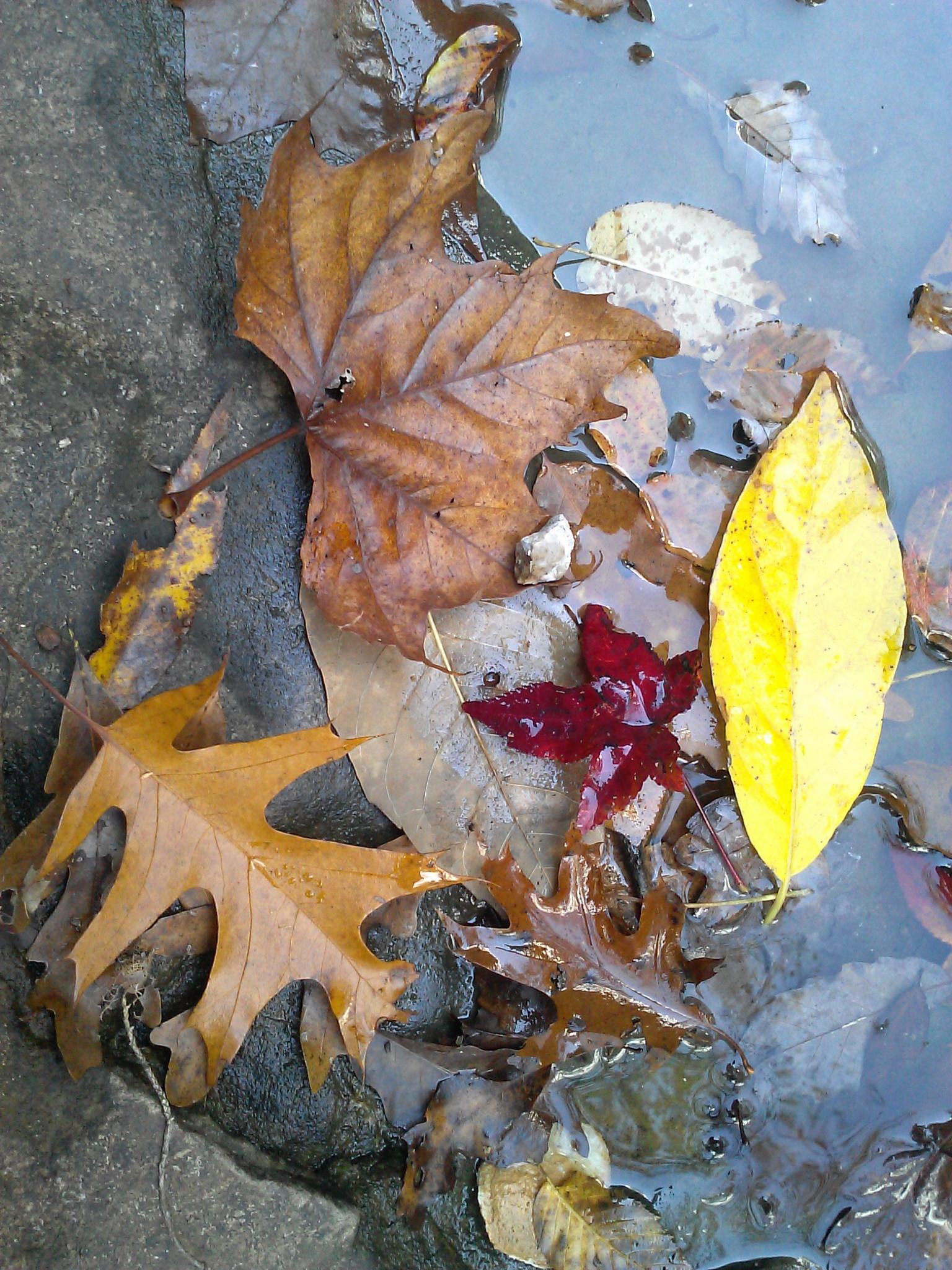 fall colors by TKC