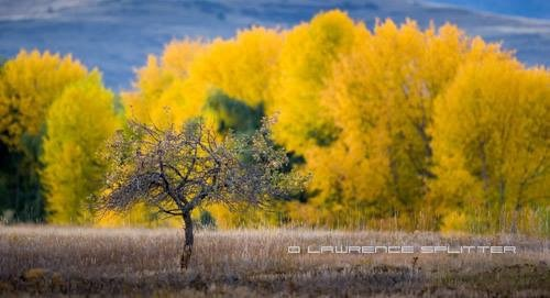 Standing out by Lawrence Splitter