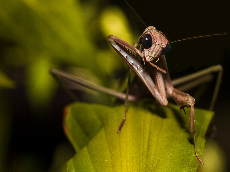 Grooming mantis by Lawrence Splitter