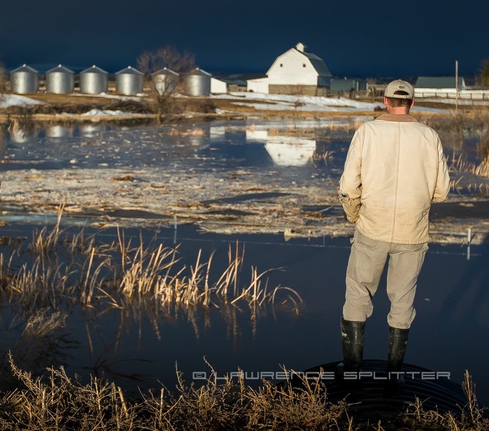 A farmer surveying flooded pasture by Lawrence Splitter