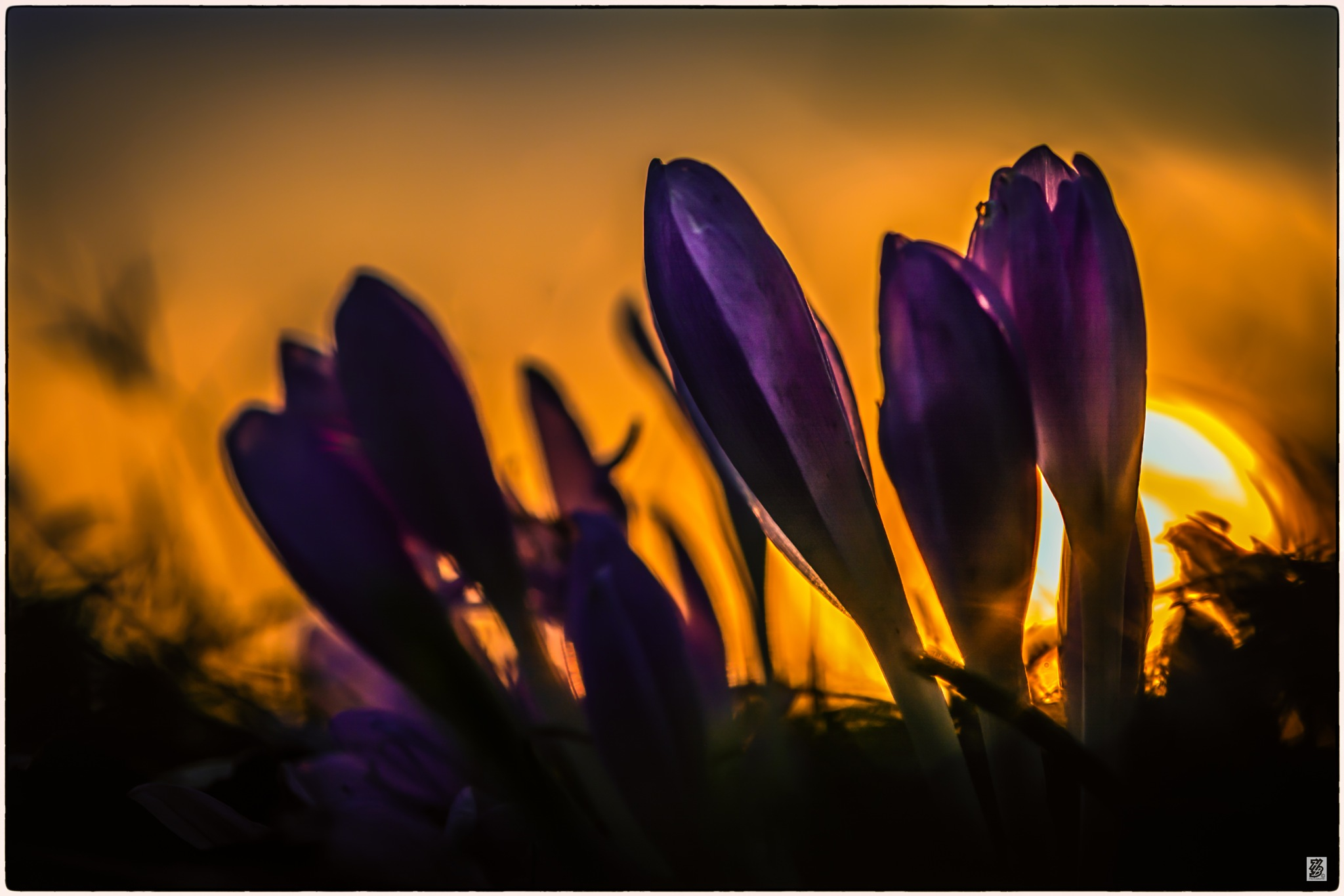 Sunset with autumn flowers... by Holinka Levente