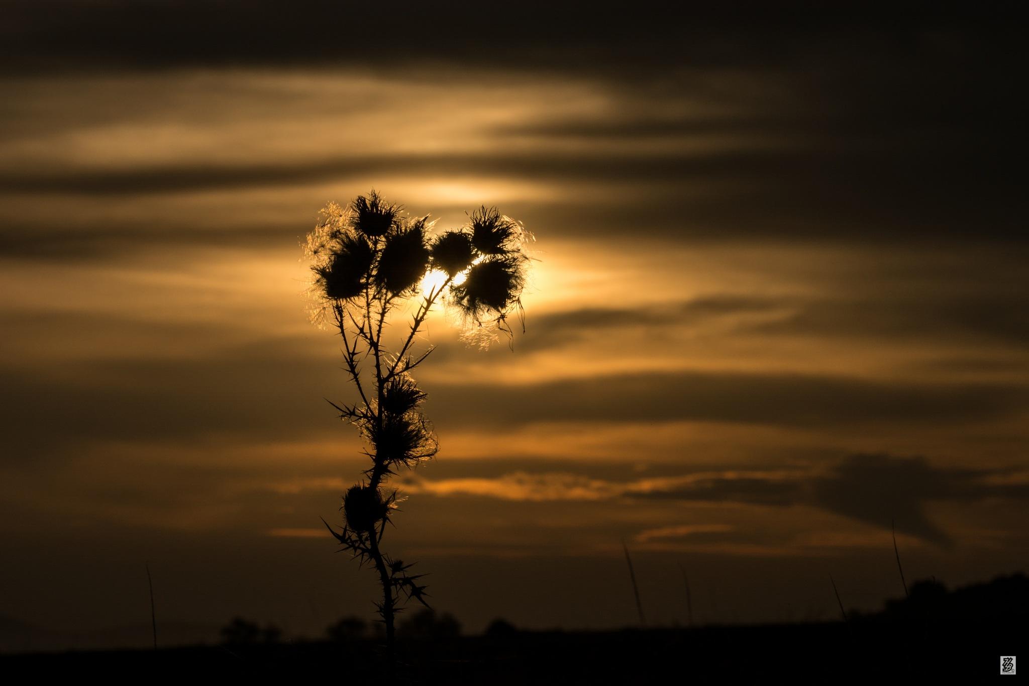 Golden sunset.... by Holinka Levente