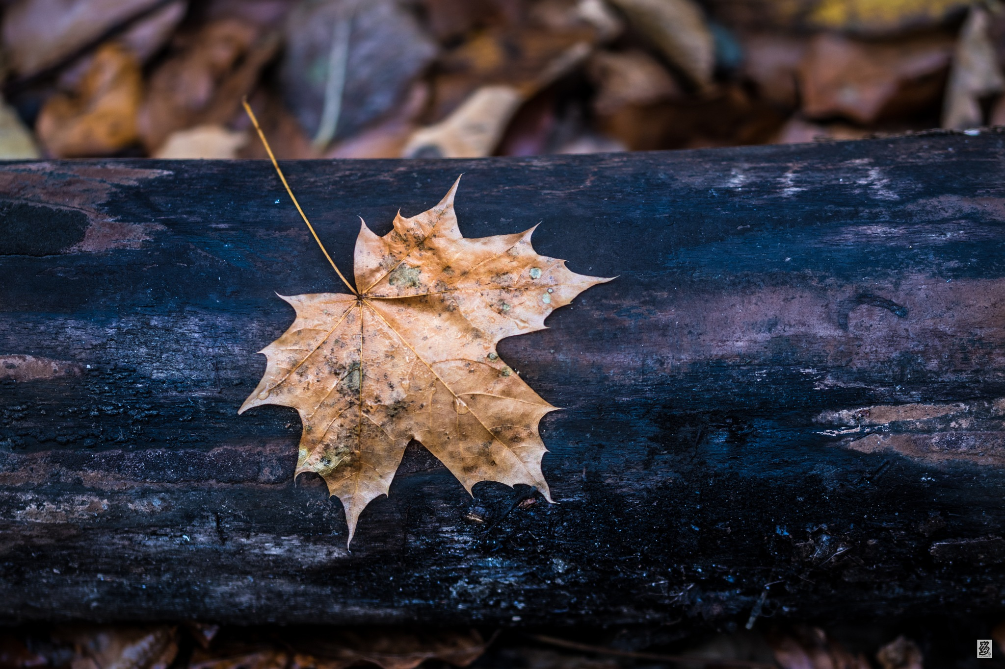 That leaf... by Holinka Levente