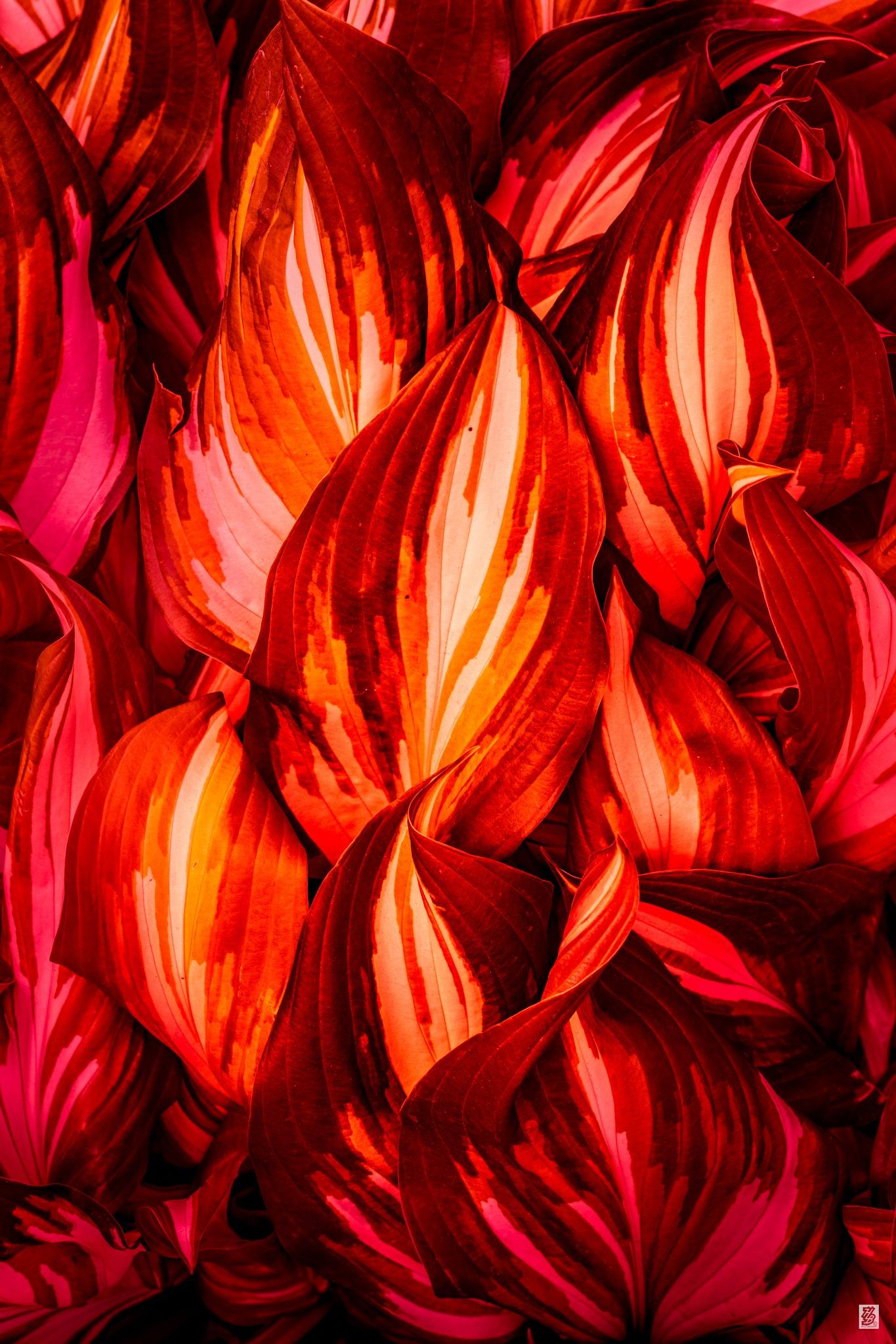 Fire... by Holinka Levente