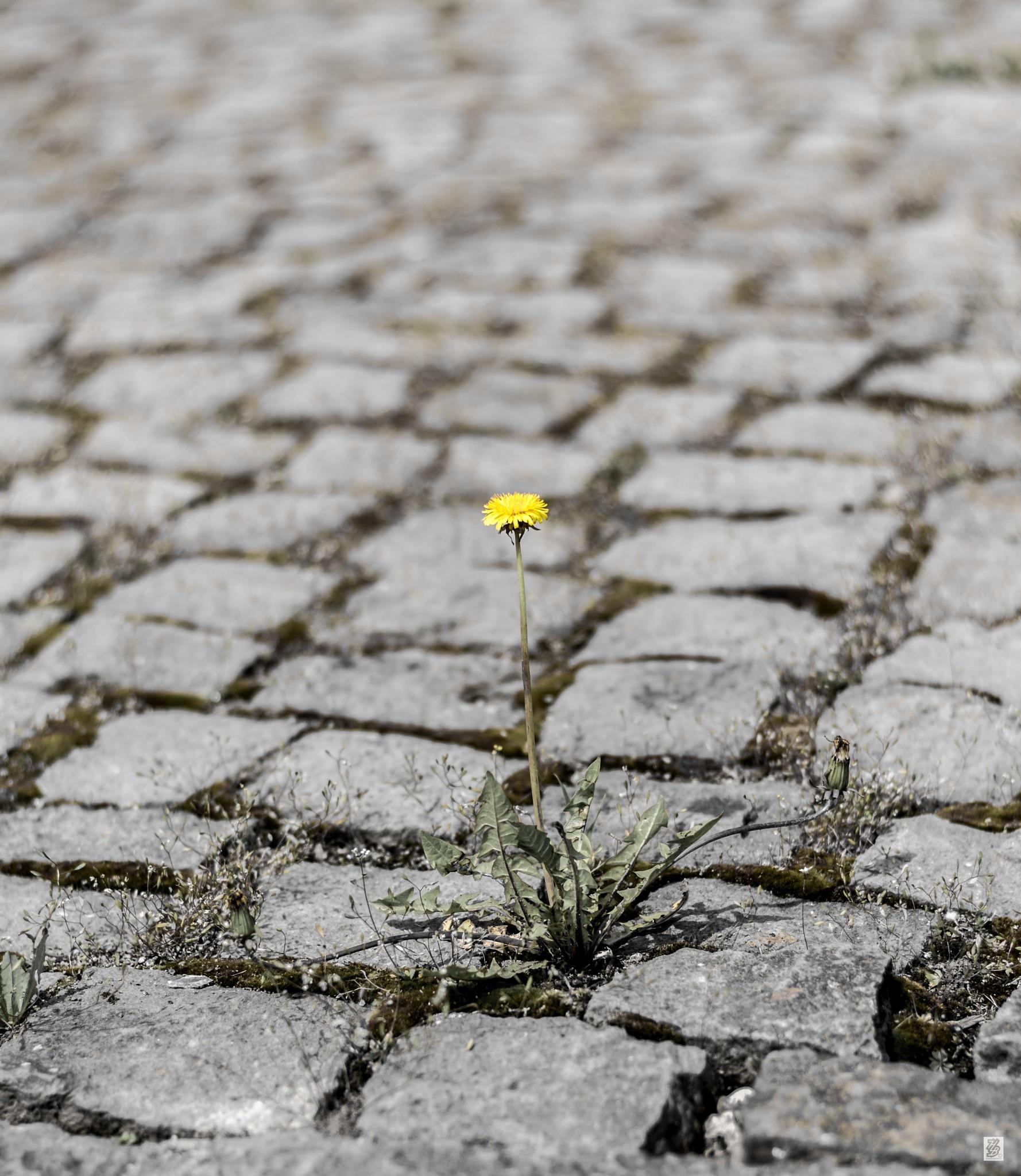 Alone... by Holinka Levente