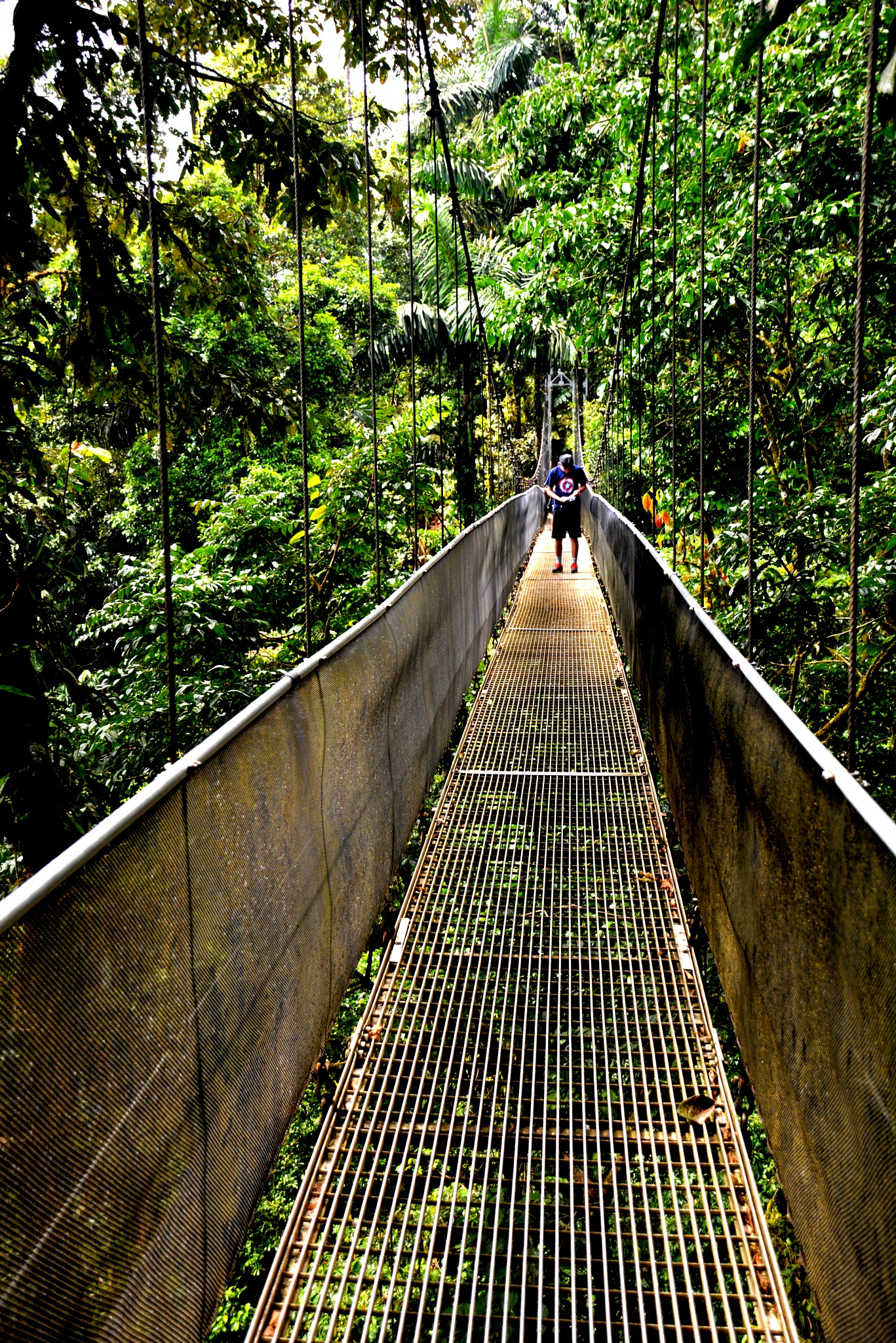 Hanging Bridge in Rainforest by HKS Images