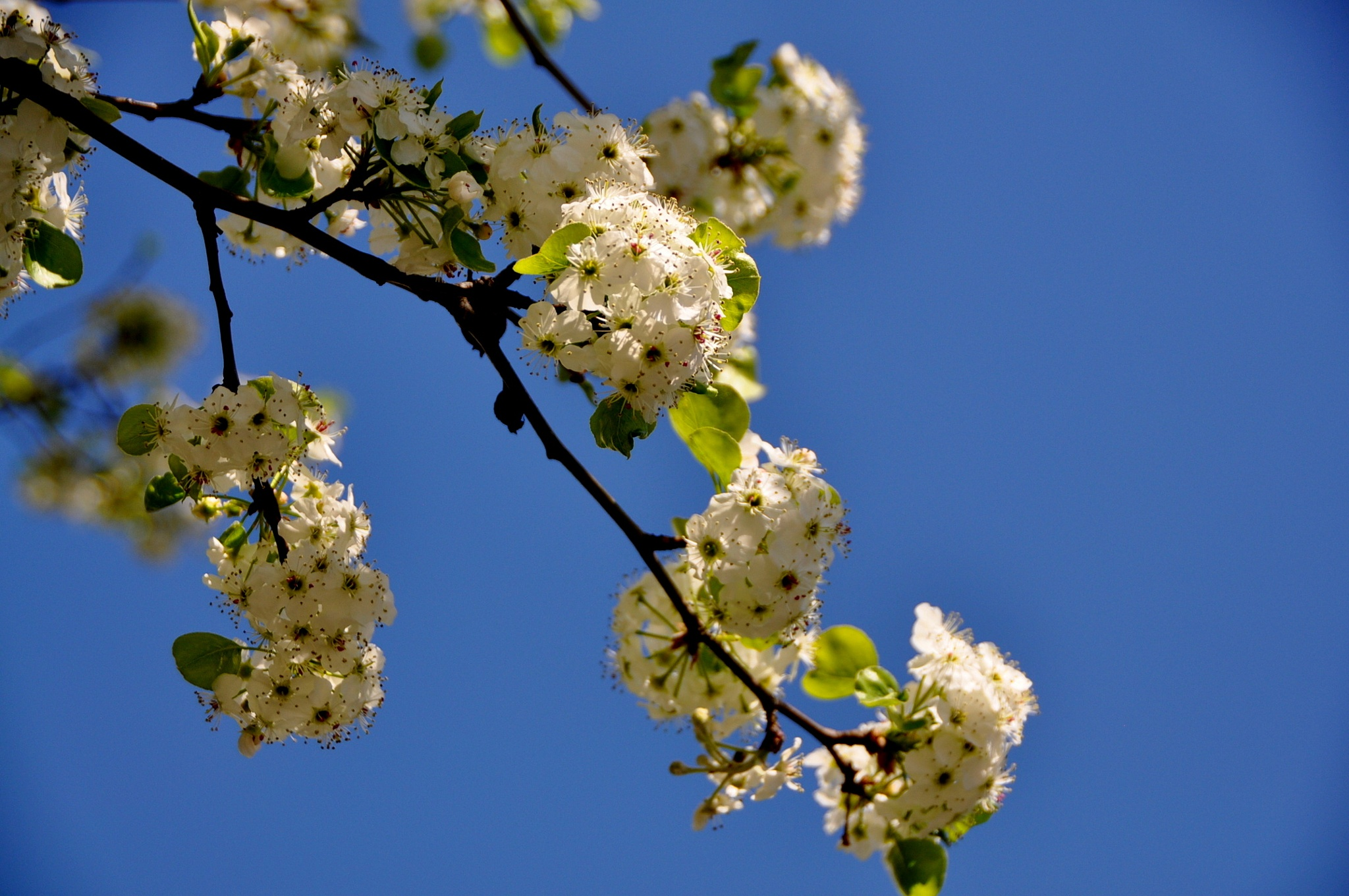 Spring Blossoms by HKS Images