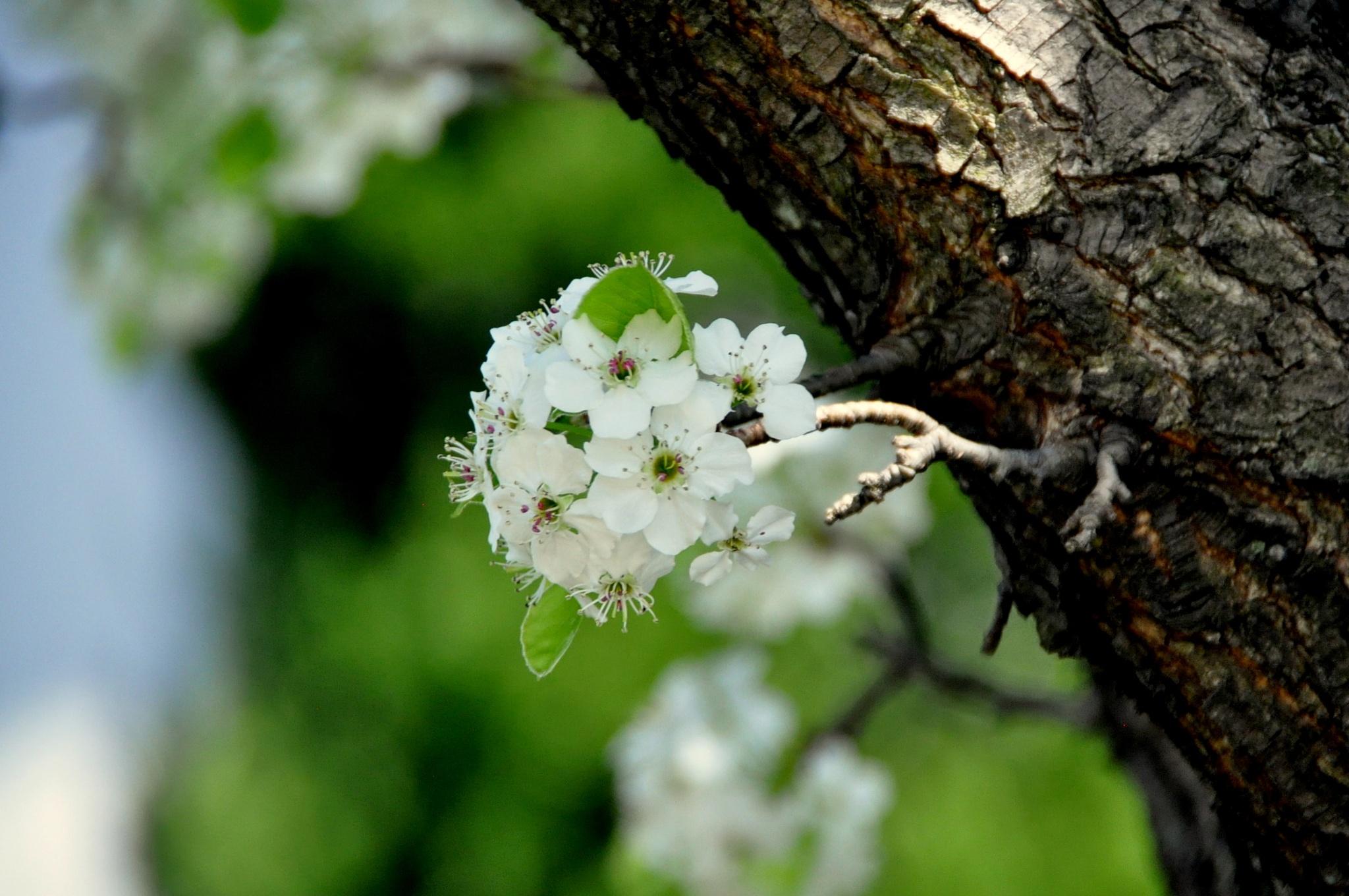 Spring Blossom 2 by HKS Images