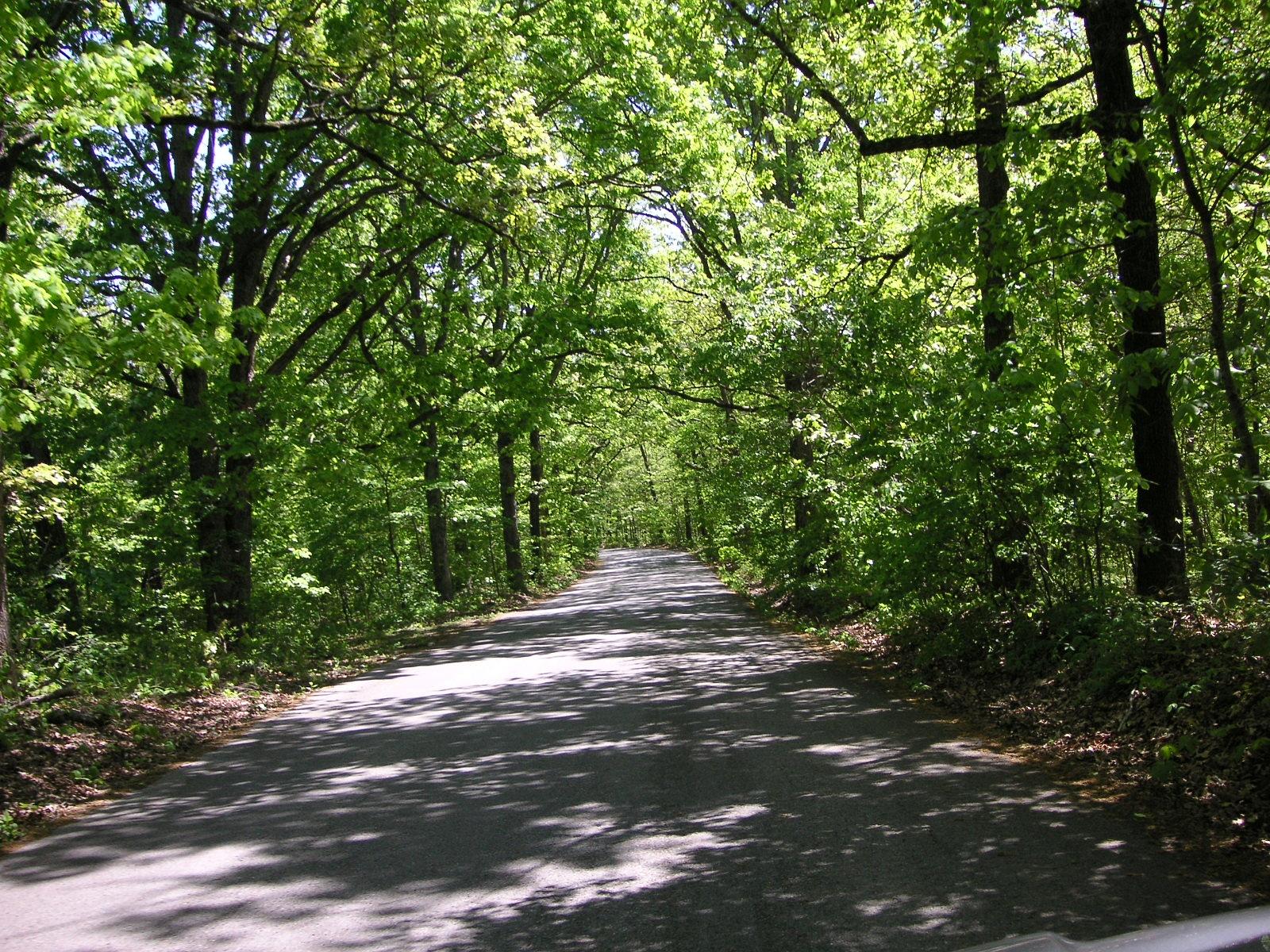 My Driveway by RichardCressy