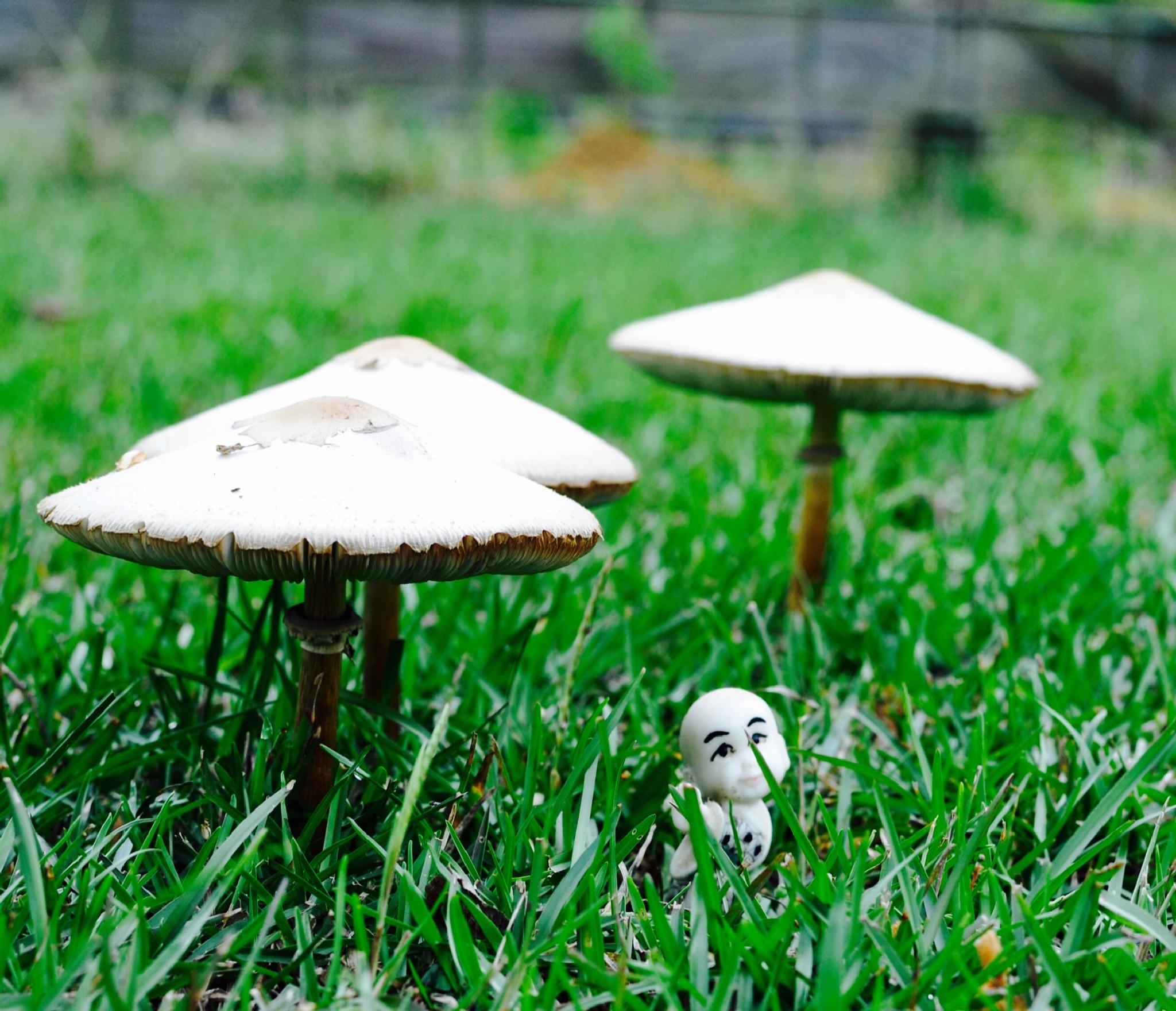 Land of the mushrooms by Kim Logan Brown