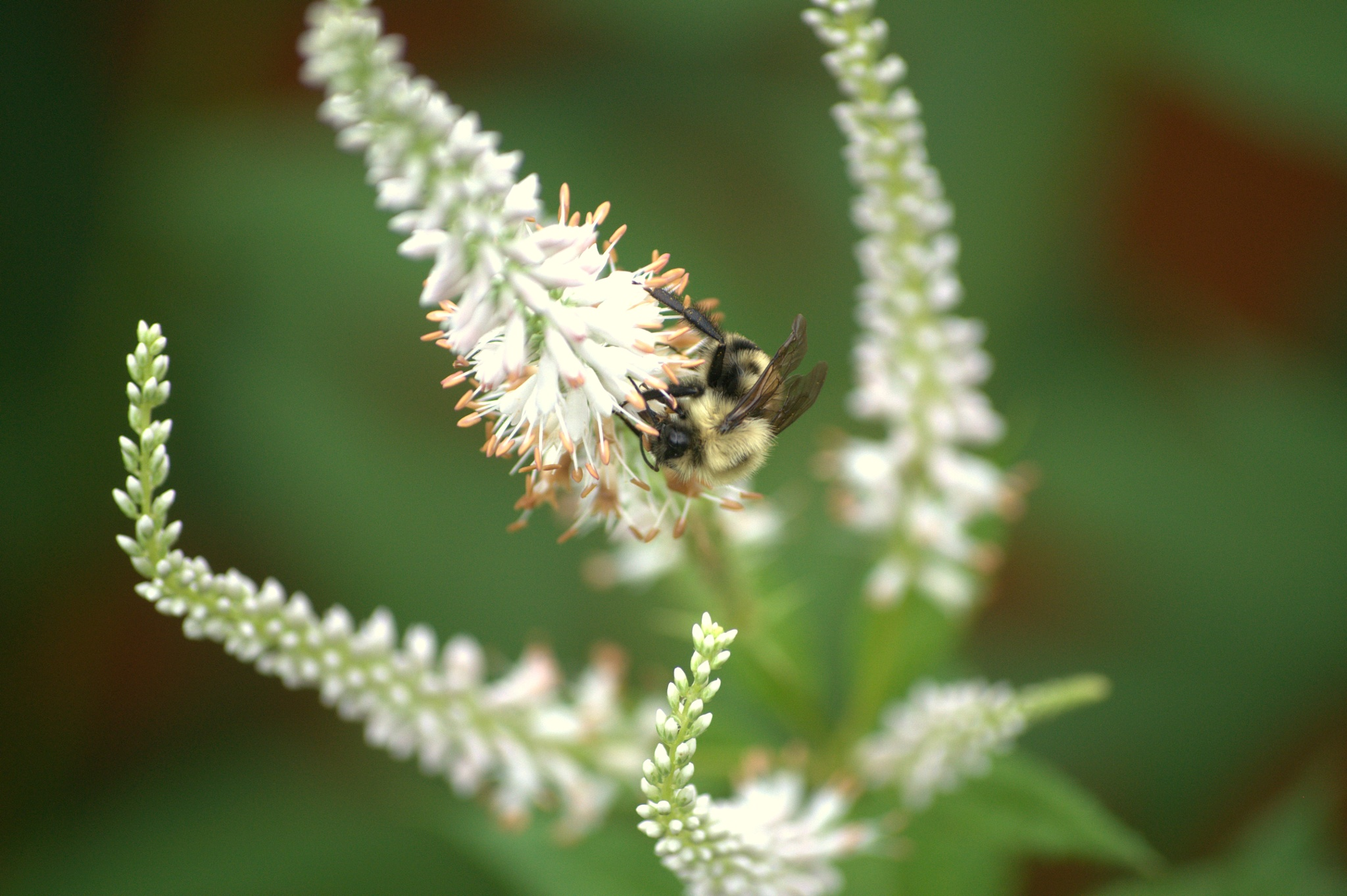 hide away bee by Helen Seaver(h.s. photography )