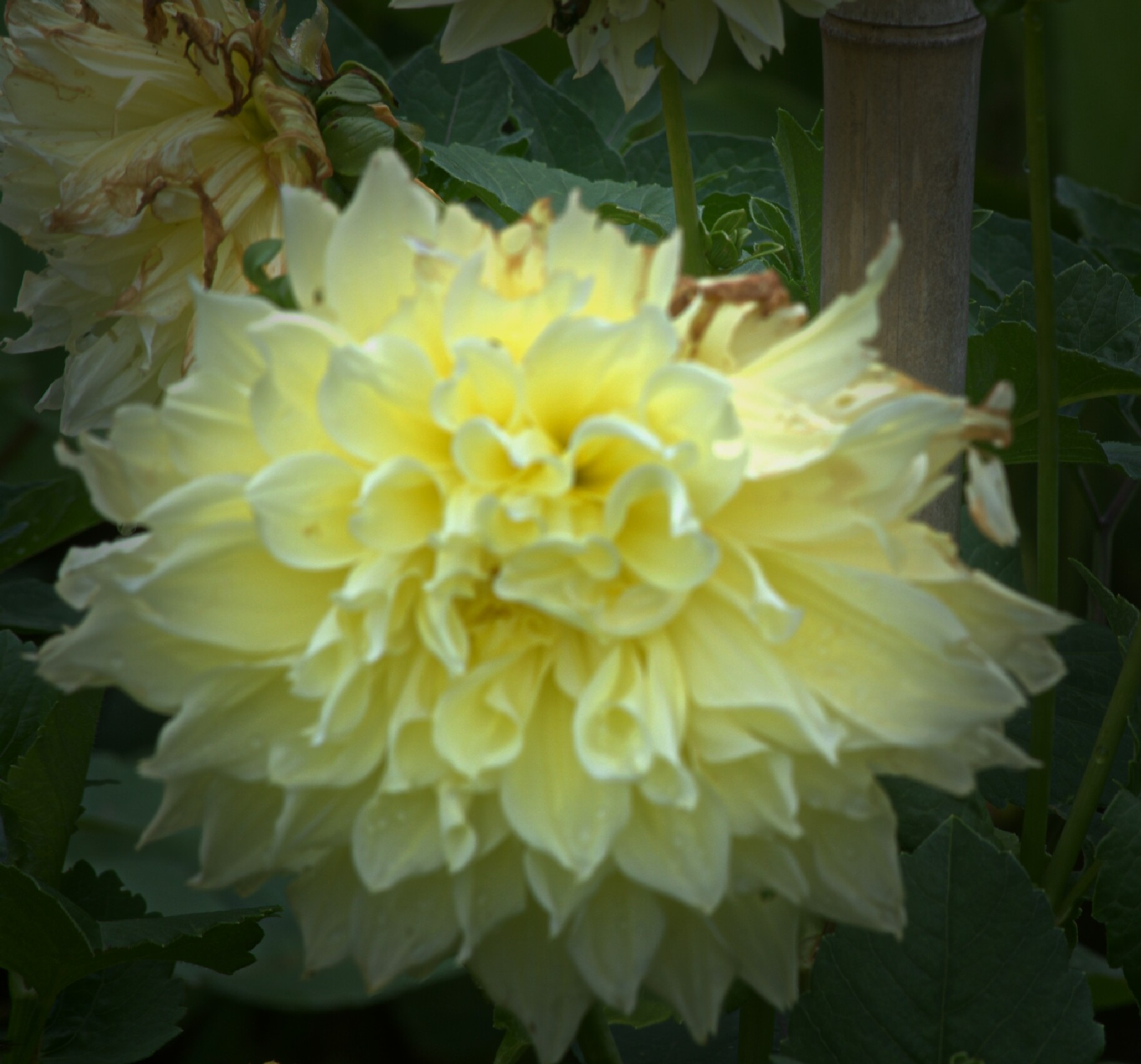 yellow flower bight and sunny  by Helen Seaver(h.s. photography )