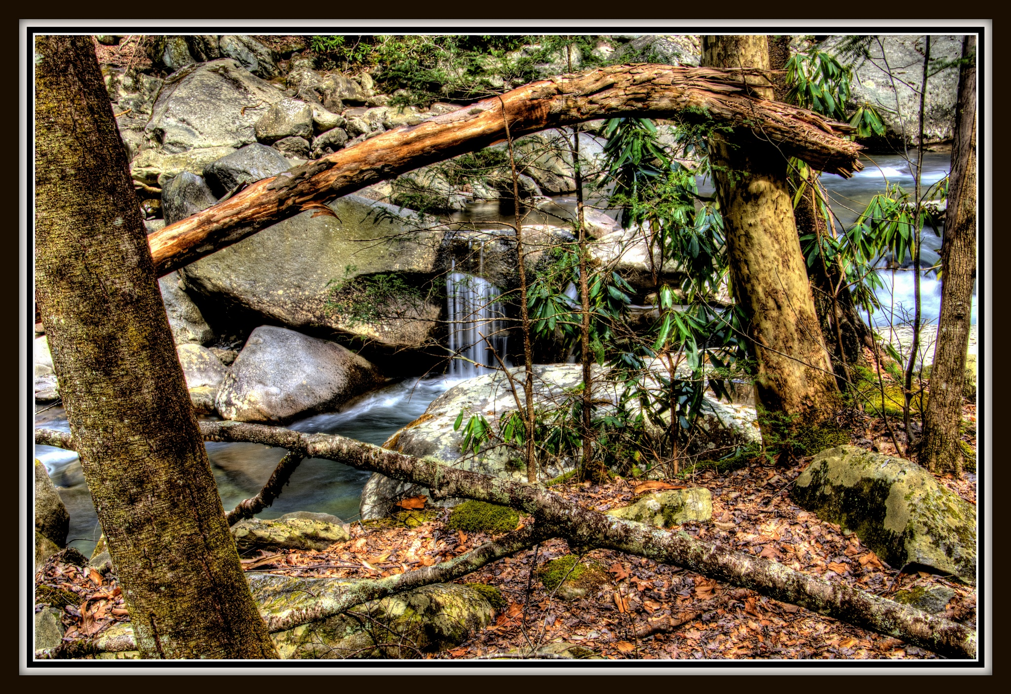 """""""Picture frame of tree's"""" by PeterMichael"""