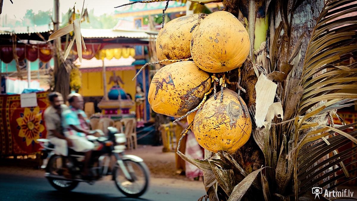 Coconut bike by Raimond Klavins