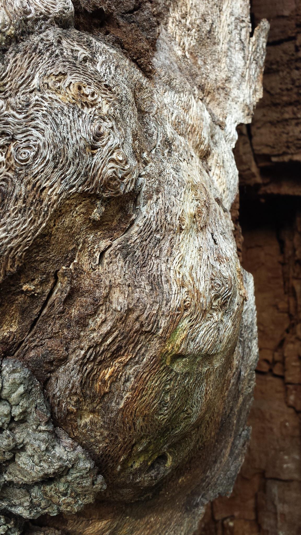 'Tree spirit' by BigstudWolf ArtS