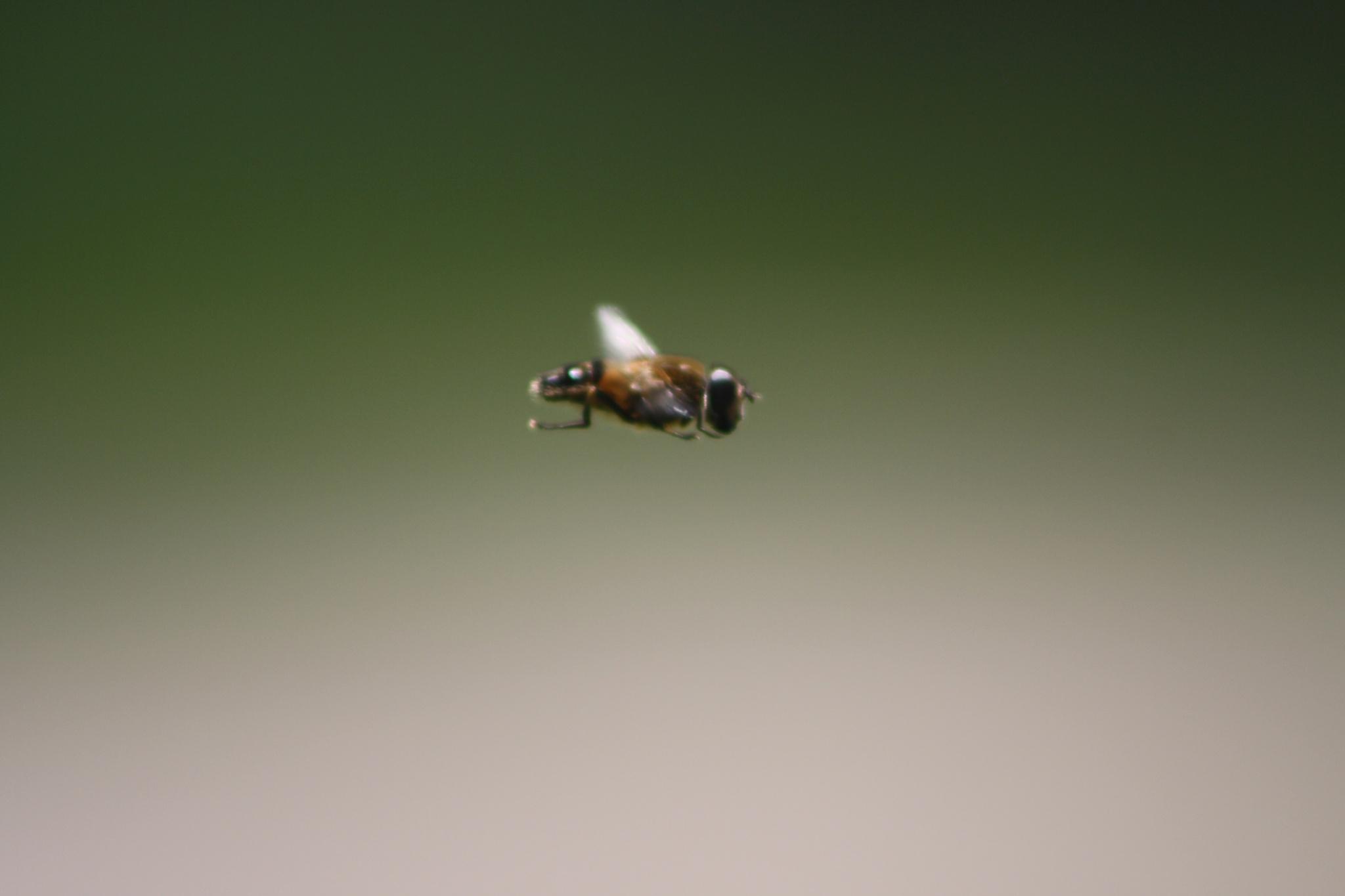 'Abelha Maia/Maya bee' by BigstudWolf ArtS
