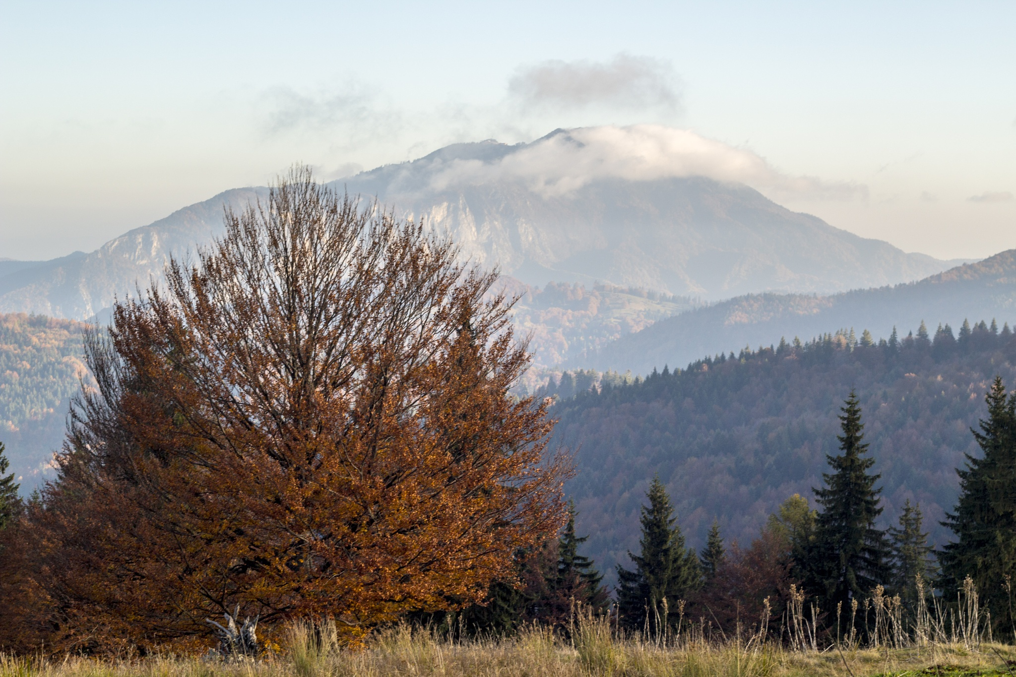 Colors of autumn by Catalin Vancea