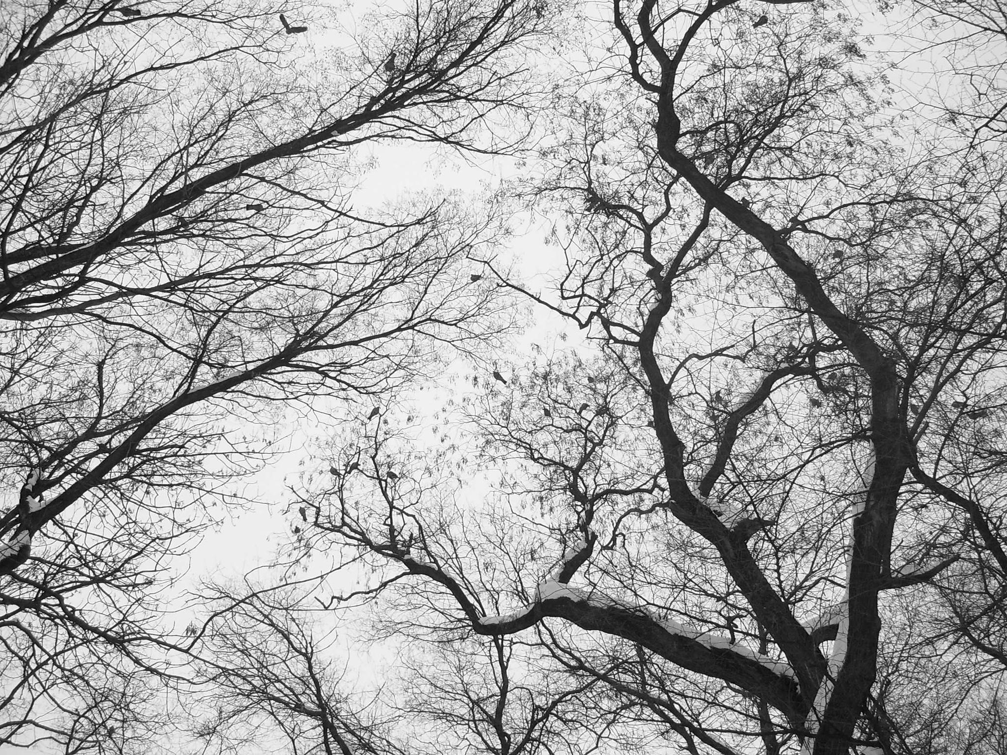 Untitled by Melitta Szathmary