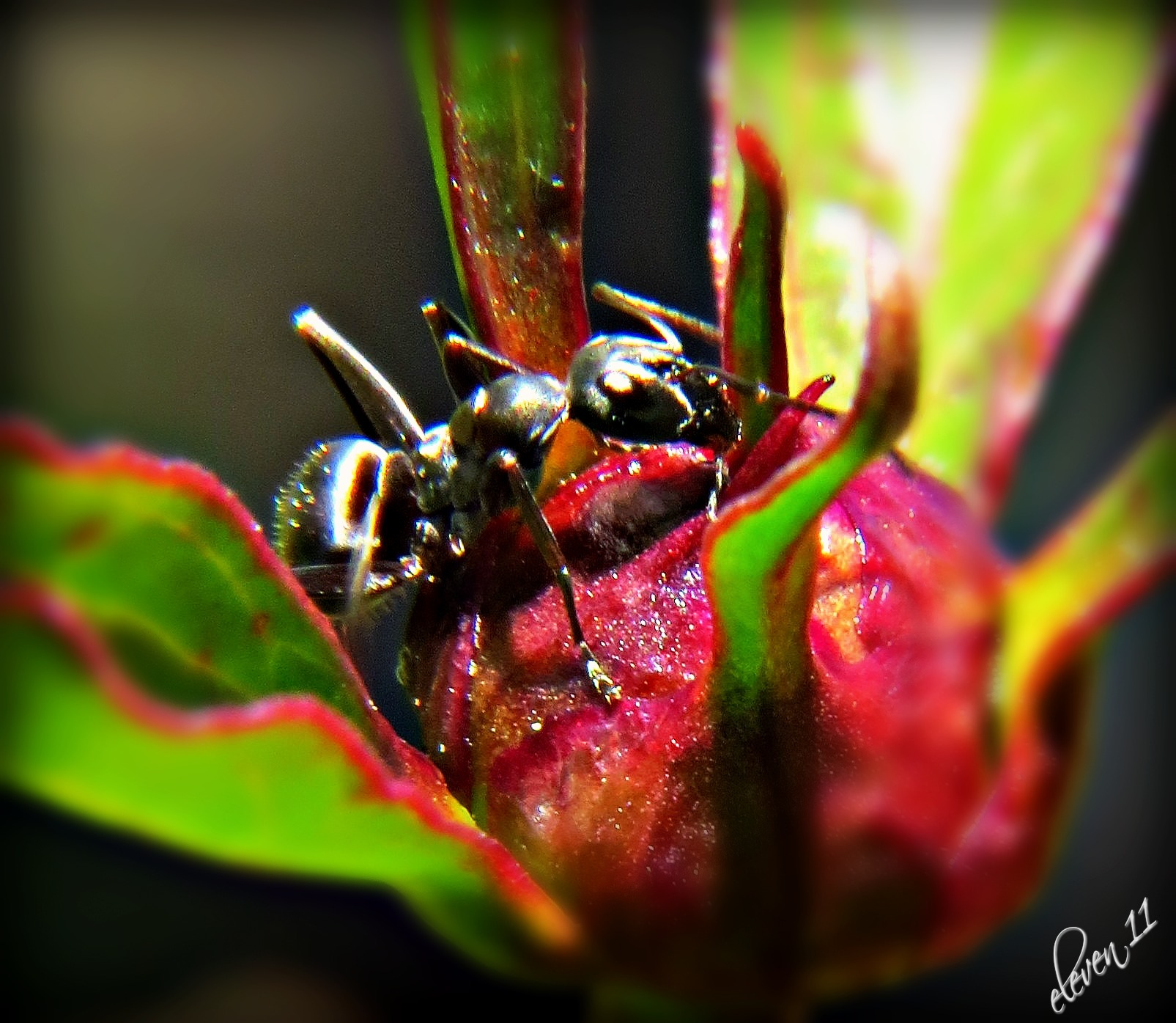 Ants by eleven 11