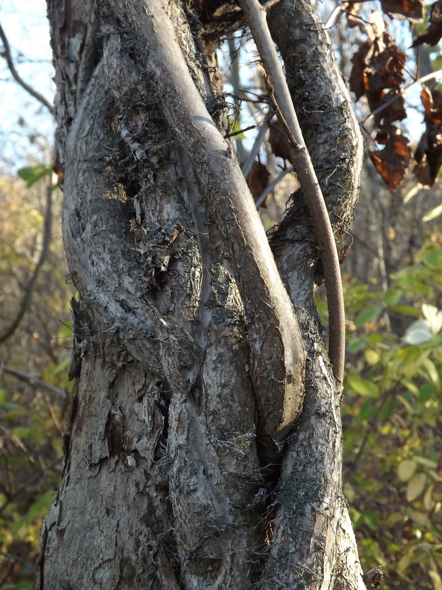 twisted tree by Jeff Palmer