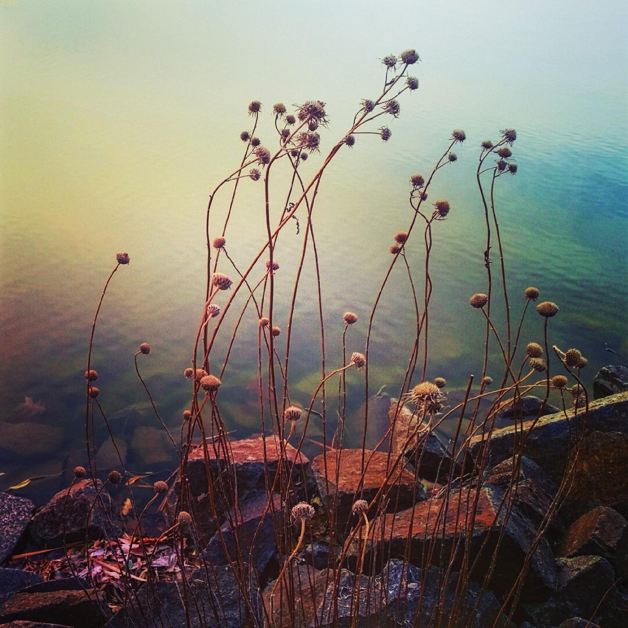 Graceful stems by Mary Ellen Sanger