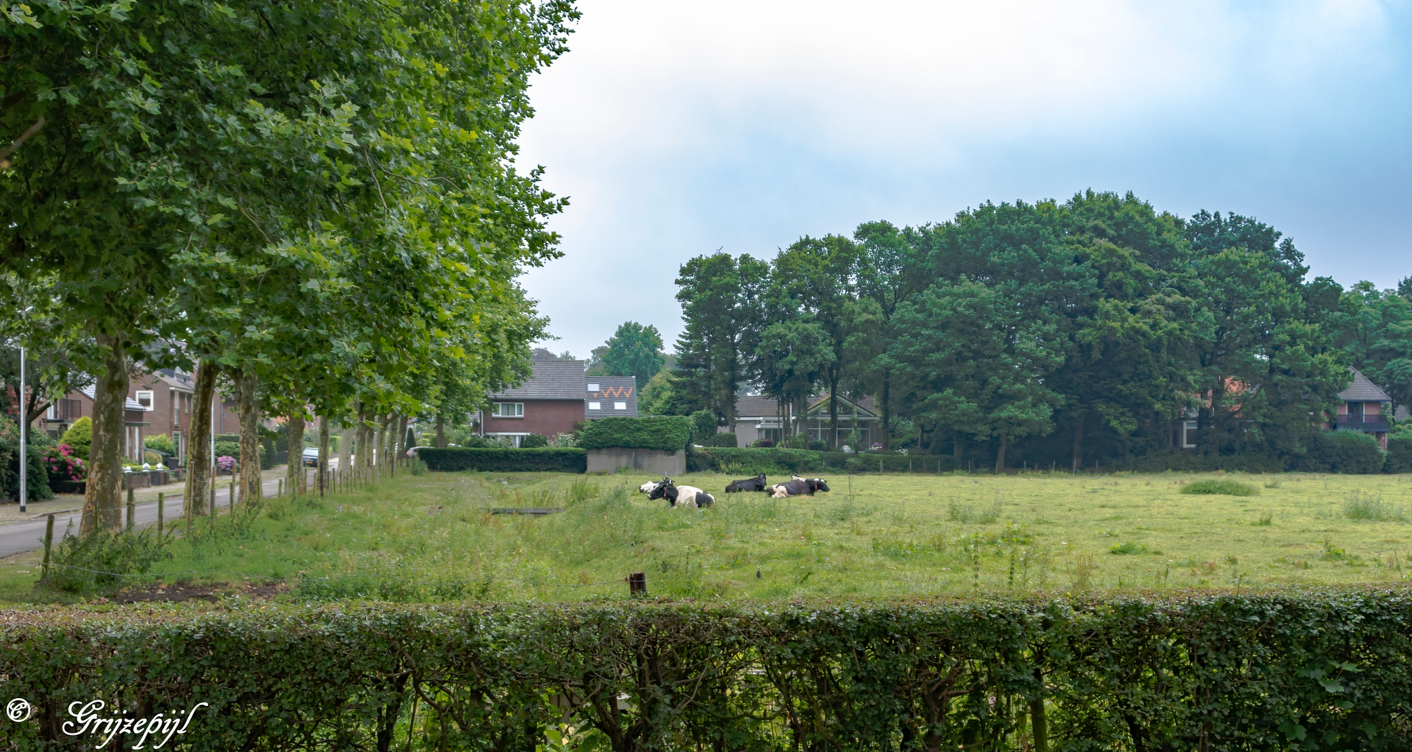Village Grassland in Muiderberg 2 by ETWEL