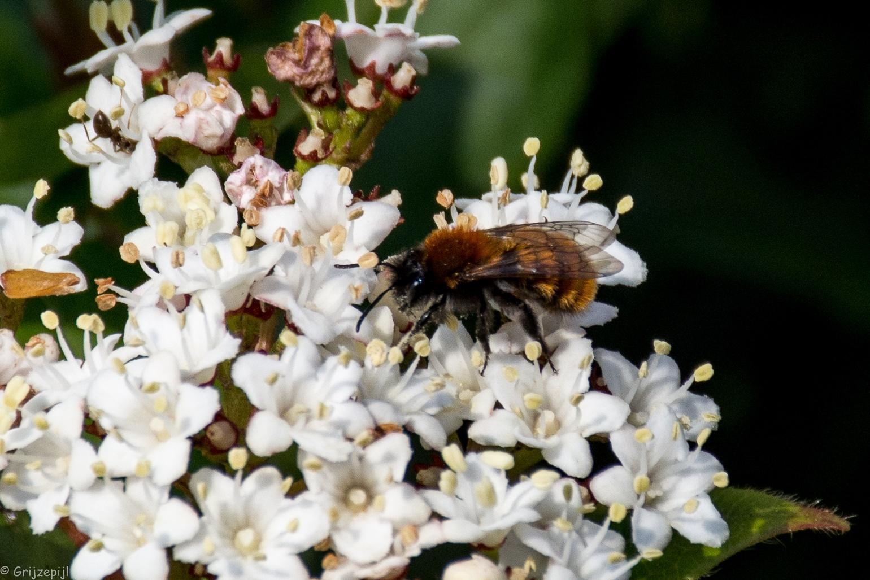 One bee by        ETWEL © Fotografie