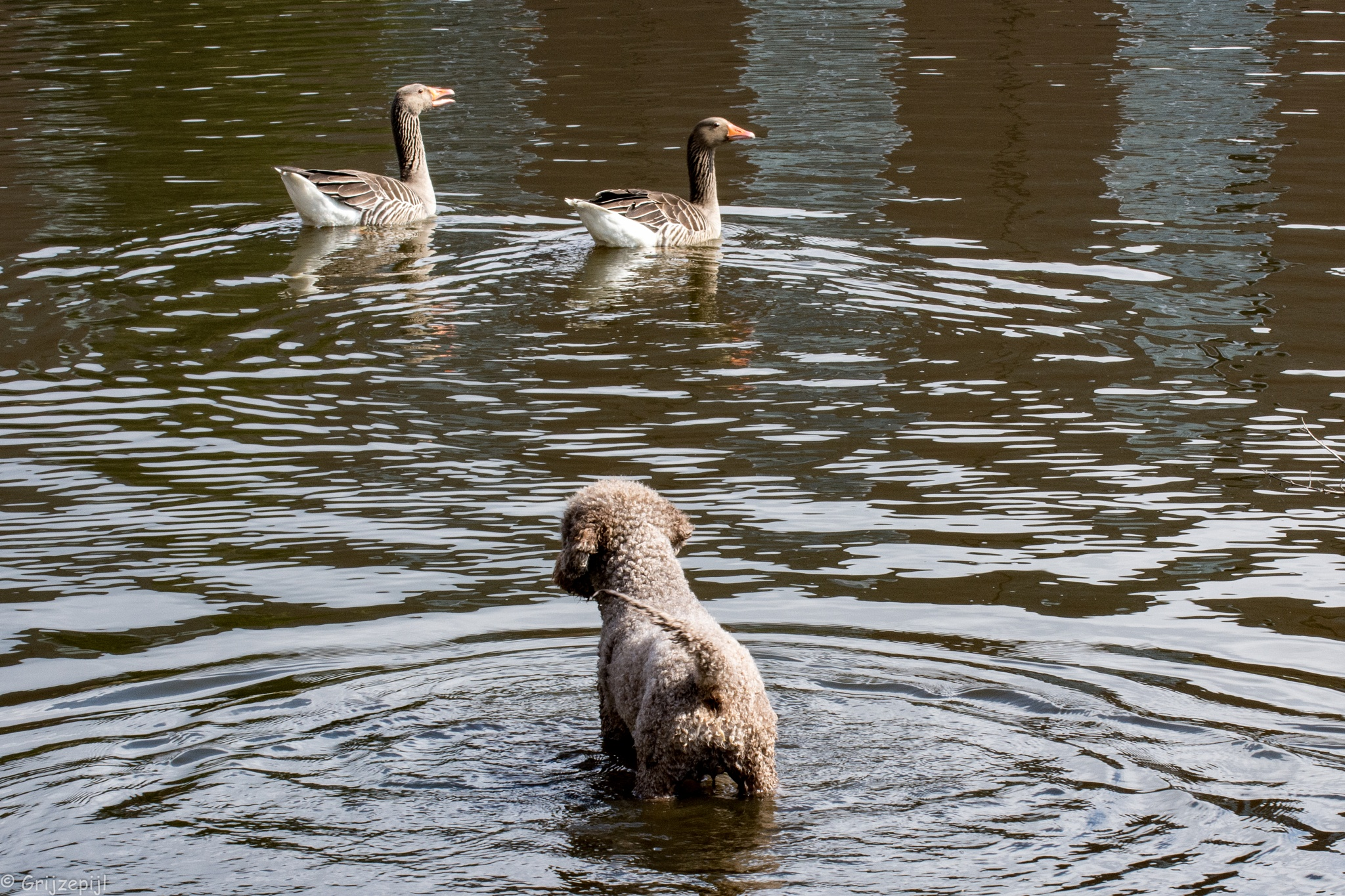 Are you waterdogs too? by        ETWEL © Fotografie