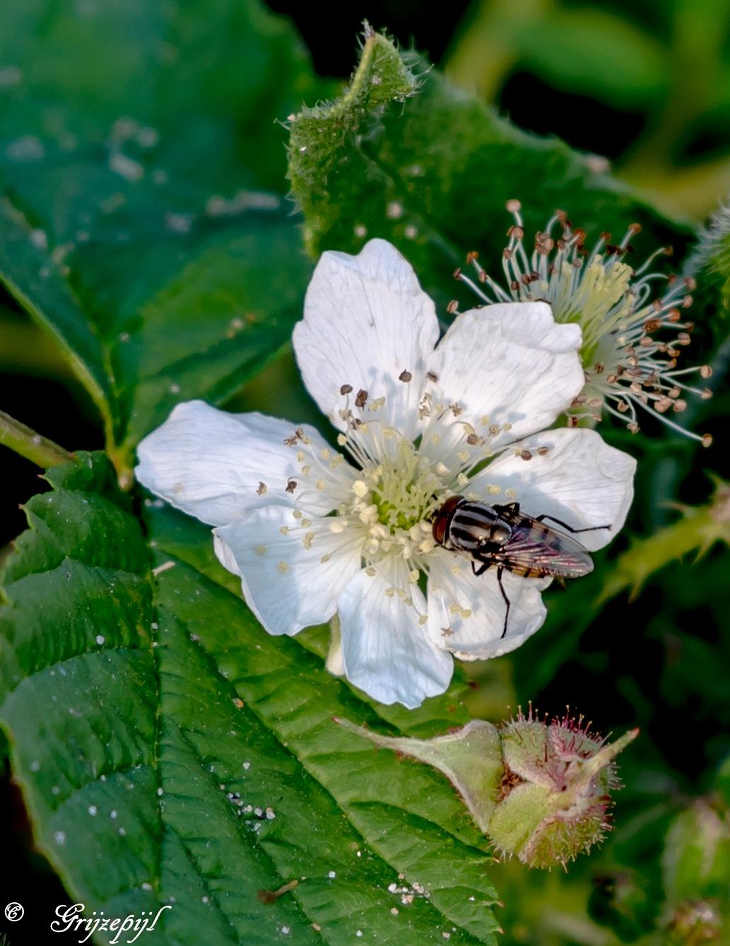 Little fly by        ETWEL © Fotografie