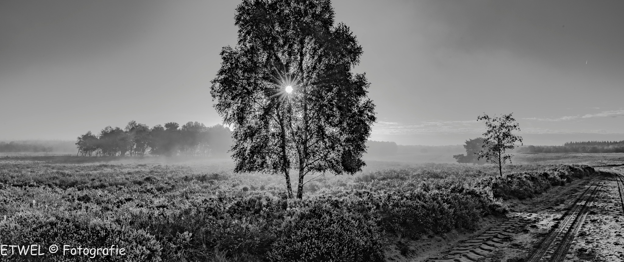 Nature in monochrome by ETWEL