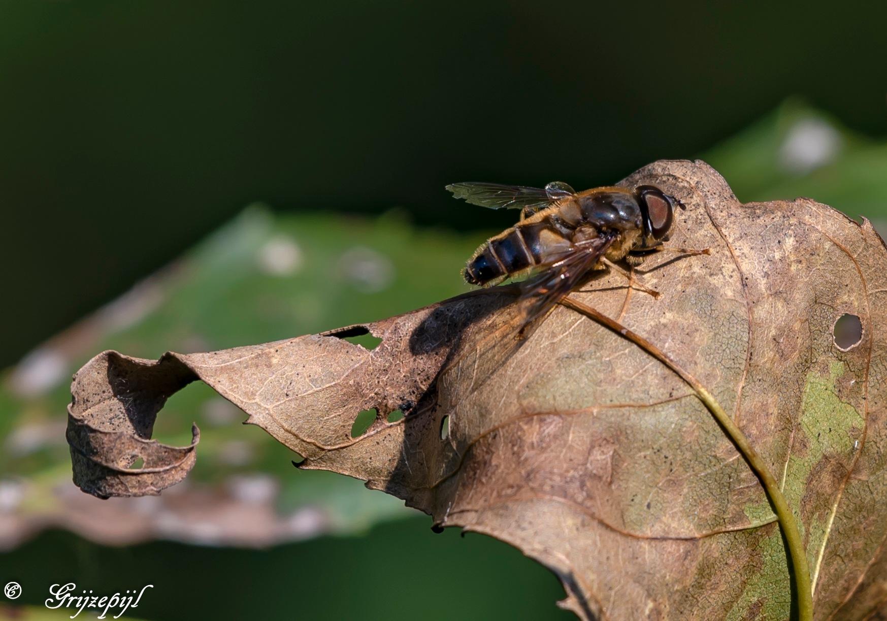 Fly by        ETWEL © Fotografie