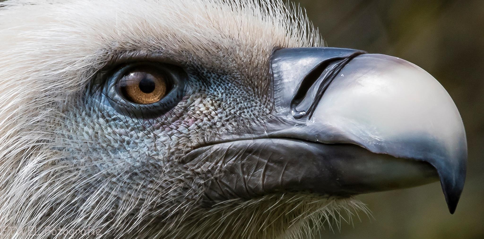Close close-up by        ETWEL © Fotografie