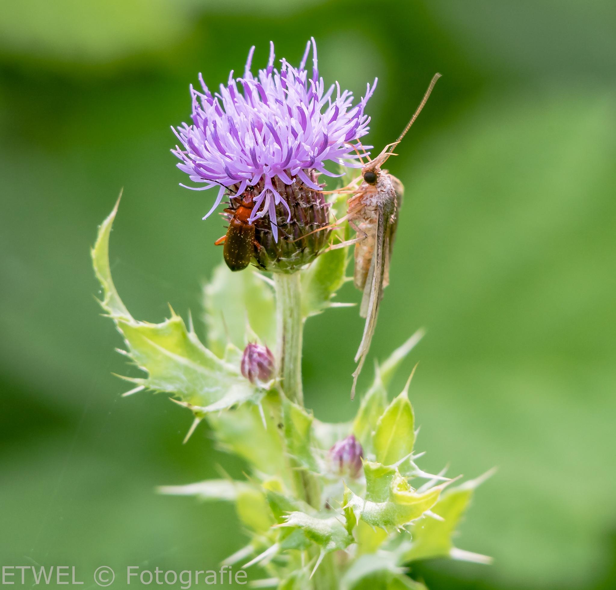 Eating together of the same flower by        ETWEL © Fotografie