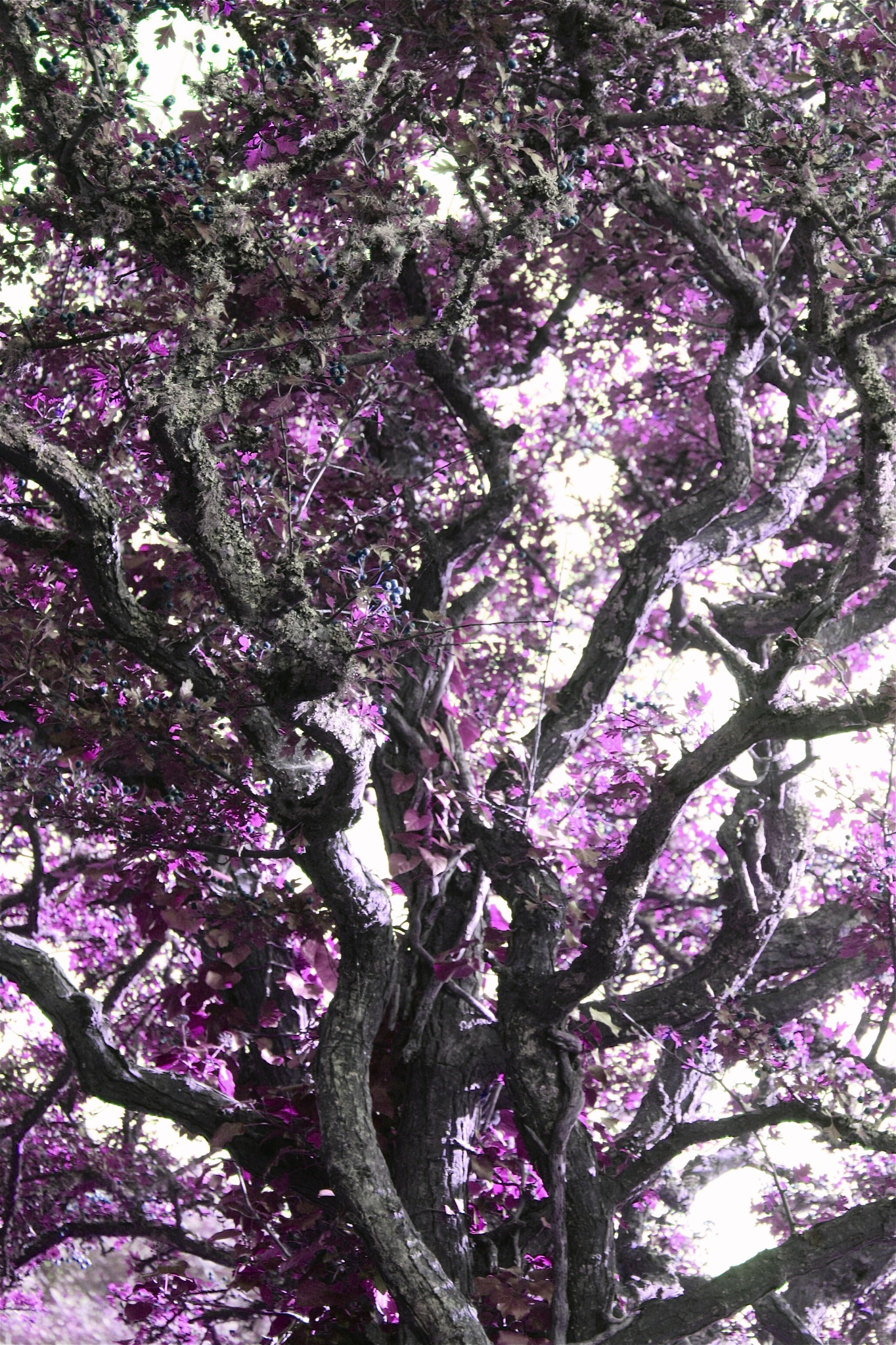 purple haze  by Dawn Younger