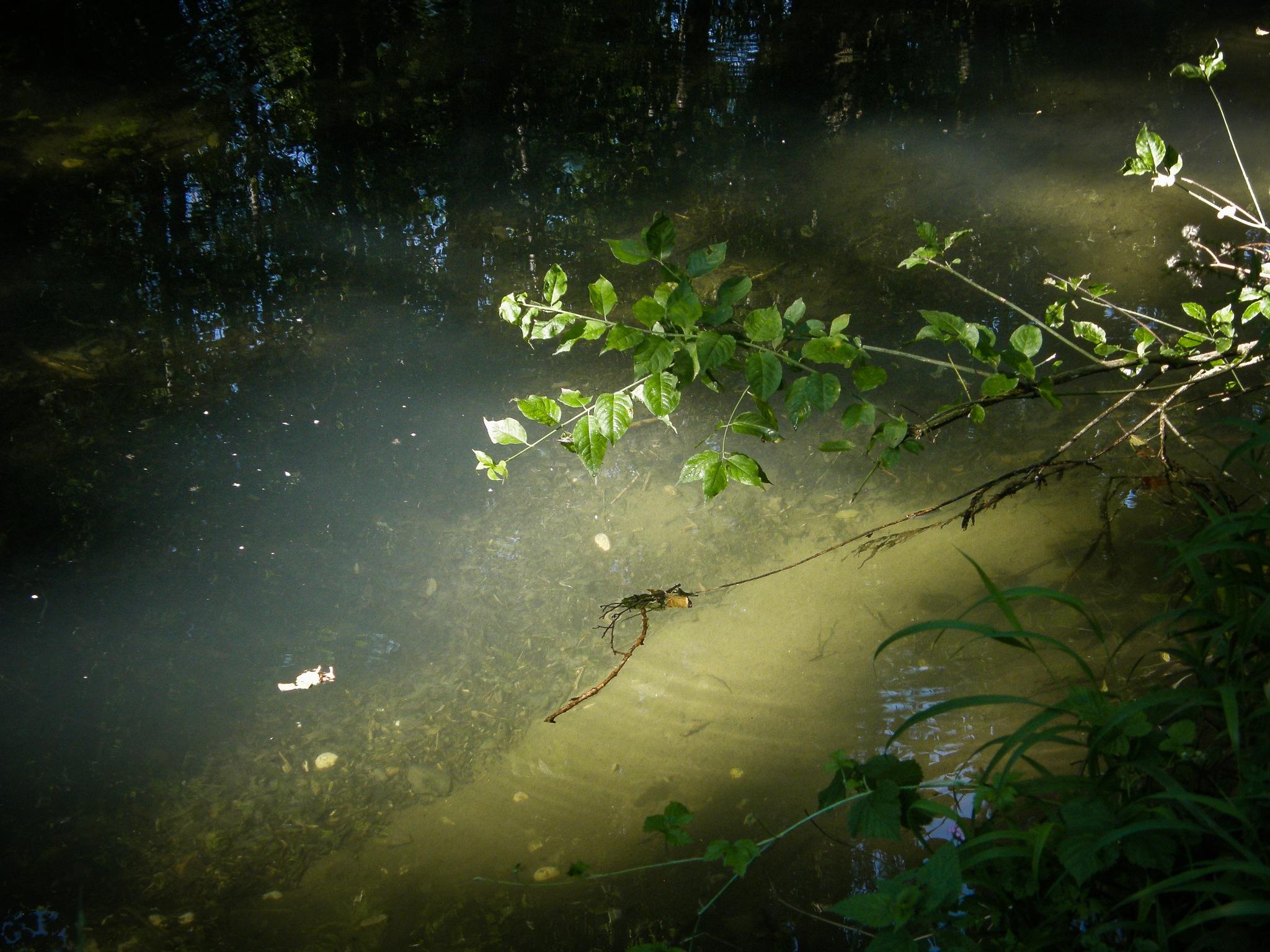 Dernier rayon en forêt by Anaxagore