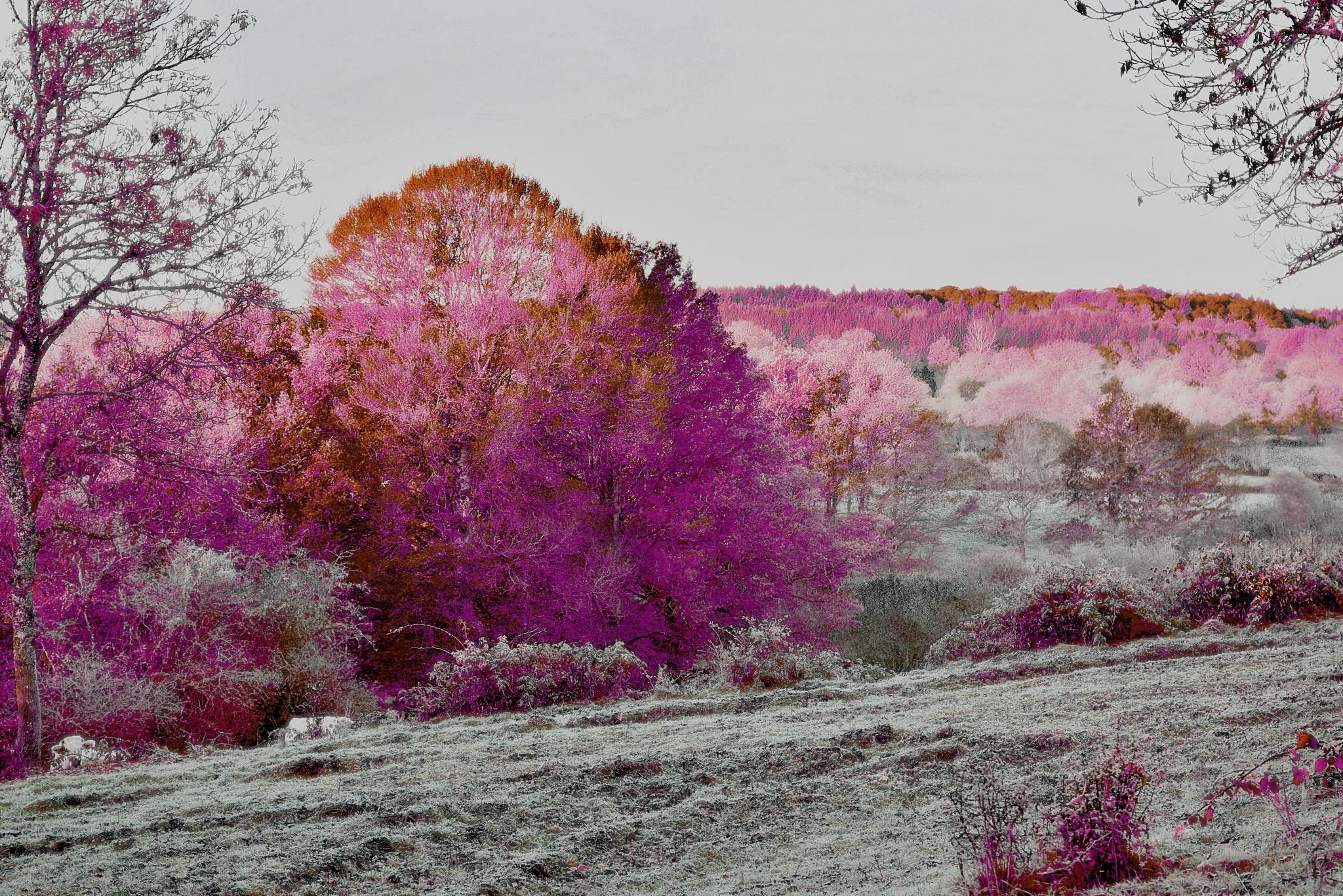 infrared trees by Armio