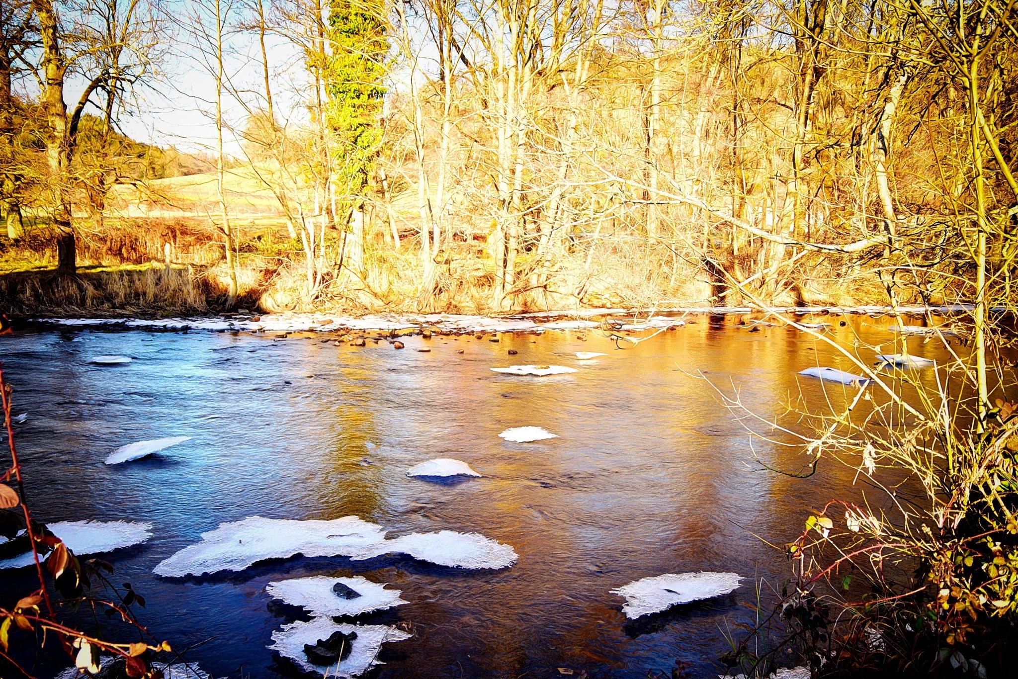 ice by Armio