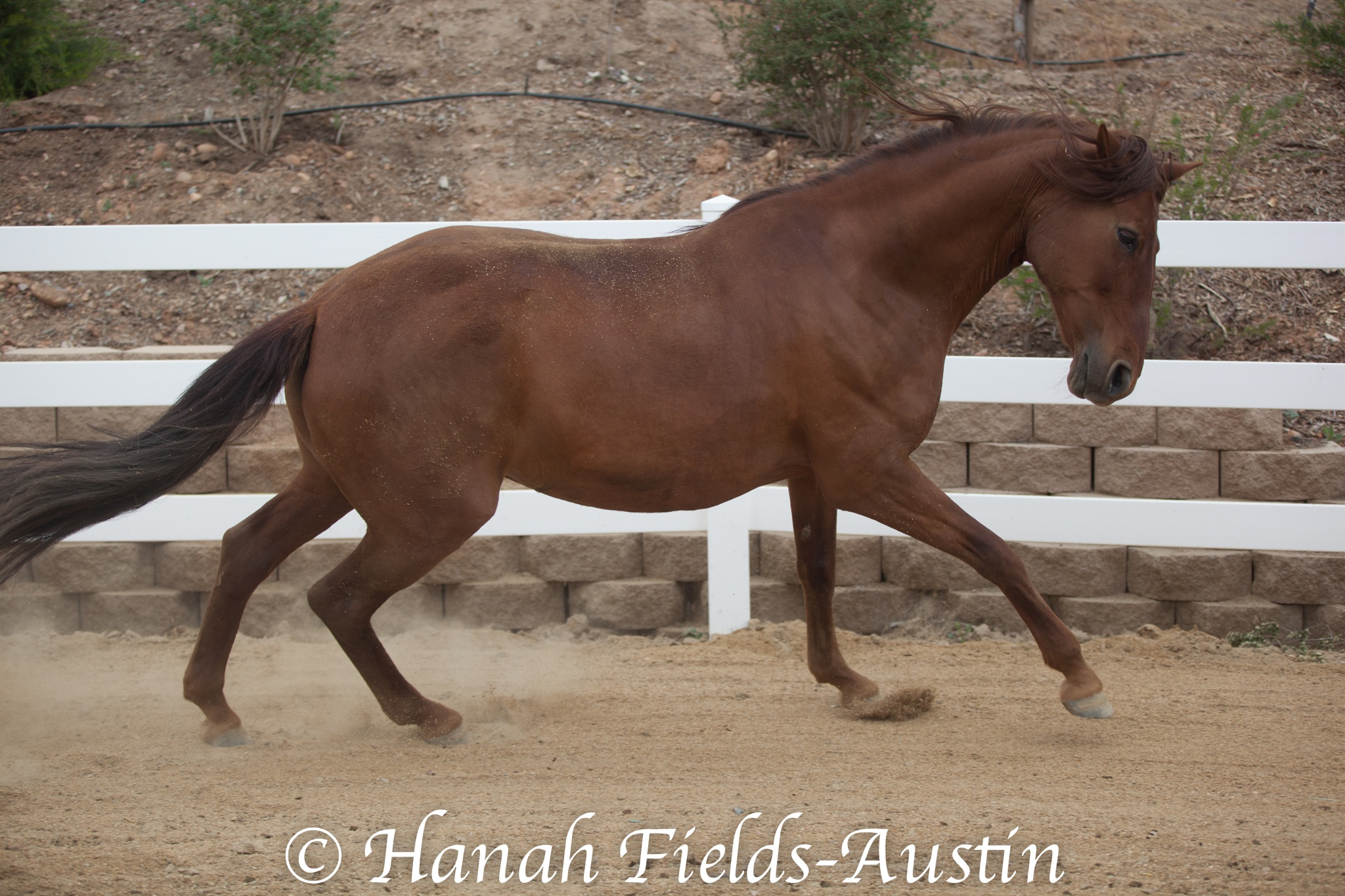 Power and Beauty by Hanah Fields-Austin