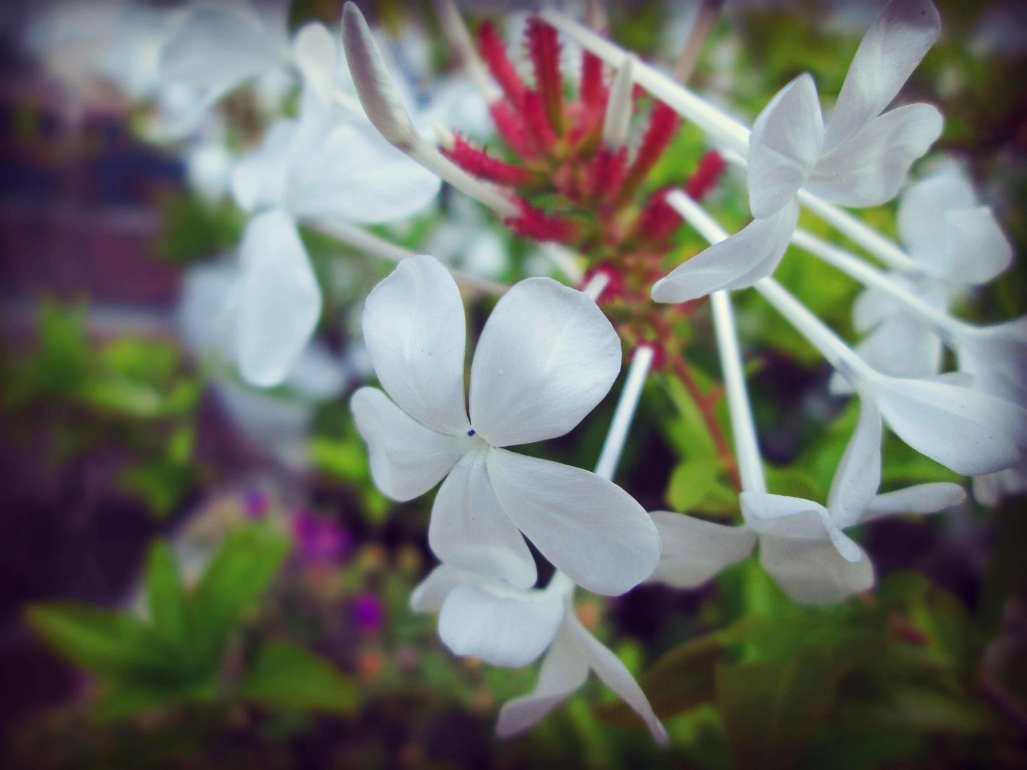 Earring Flowers by Kate Blake