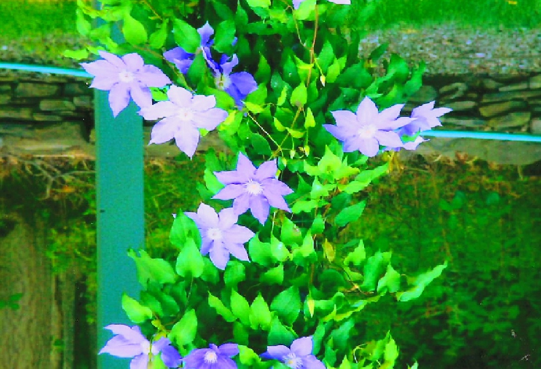 Flors by Elmer Leach