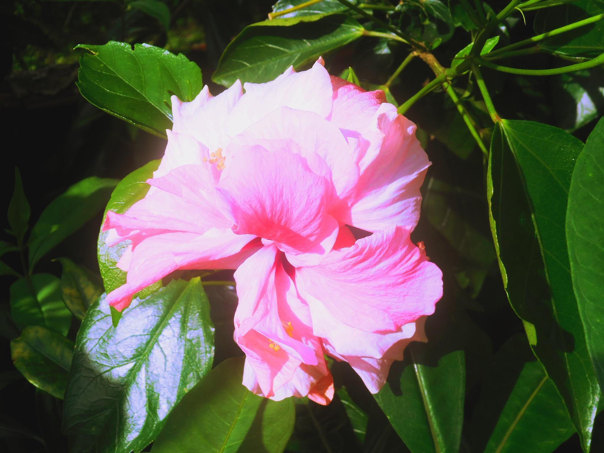 Bonita Flor by Elmer Leach